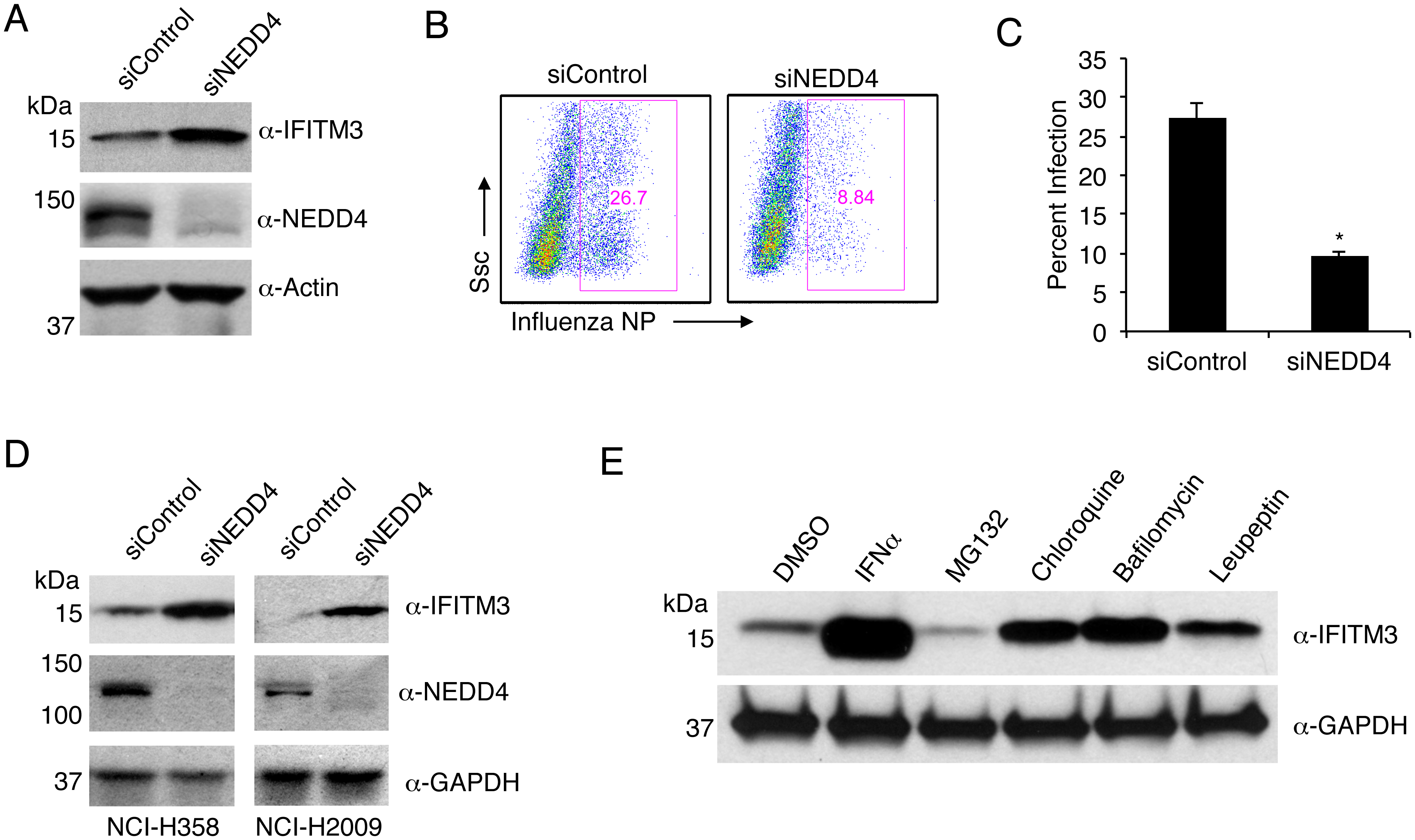 NEDD4 knockdown in human lung cells increases IFITM3 levels and resistance to influenza virus infection.