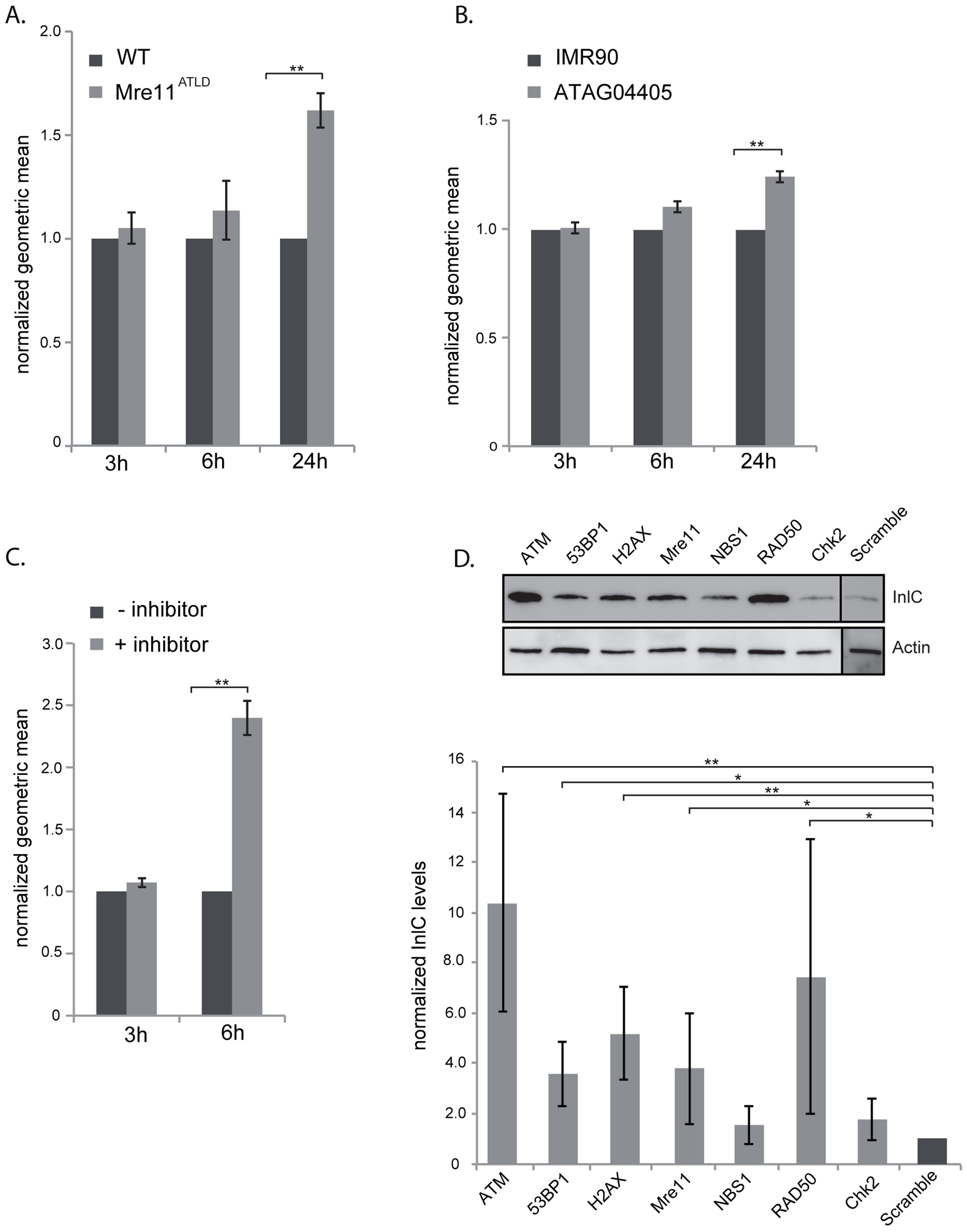 The DNA damage response is negative regulator of infection.