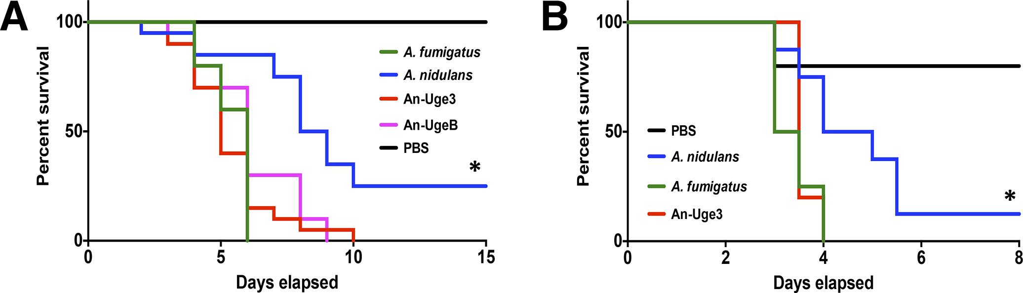 Overexpression of <i>uge3</i> in <i>A</i>. <i>nidulans</i> increases virulence in mice.