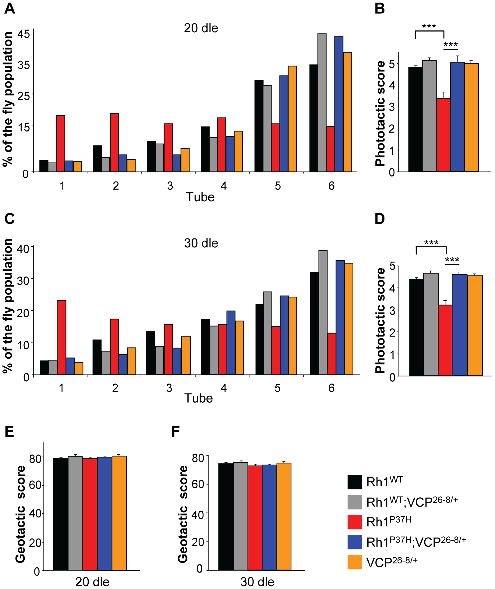 Altered phototaxis in <i>Rh1<sup>P37H</sup></i>-expressing flies is rescued by <i>VCP</i> loss-of-function allele.