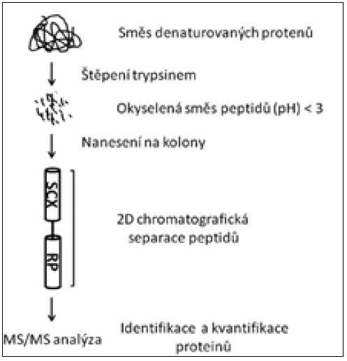 Schéma metody multidimenzionální proteinové identifikace [66]. SCX – latexová kolona, RP – kolona s reverzní fází