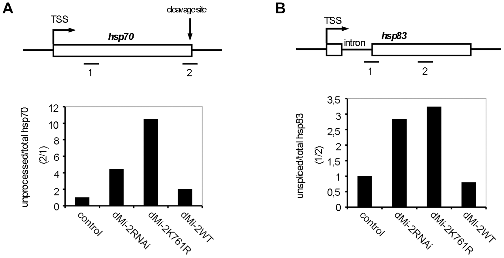 dMi-2 is required for efficient RNA processing.
