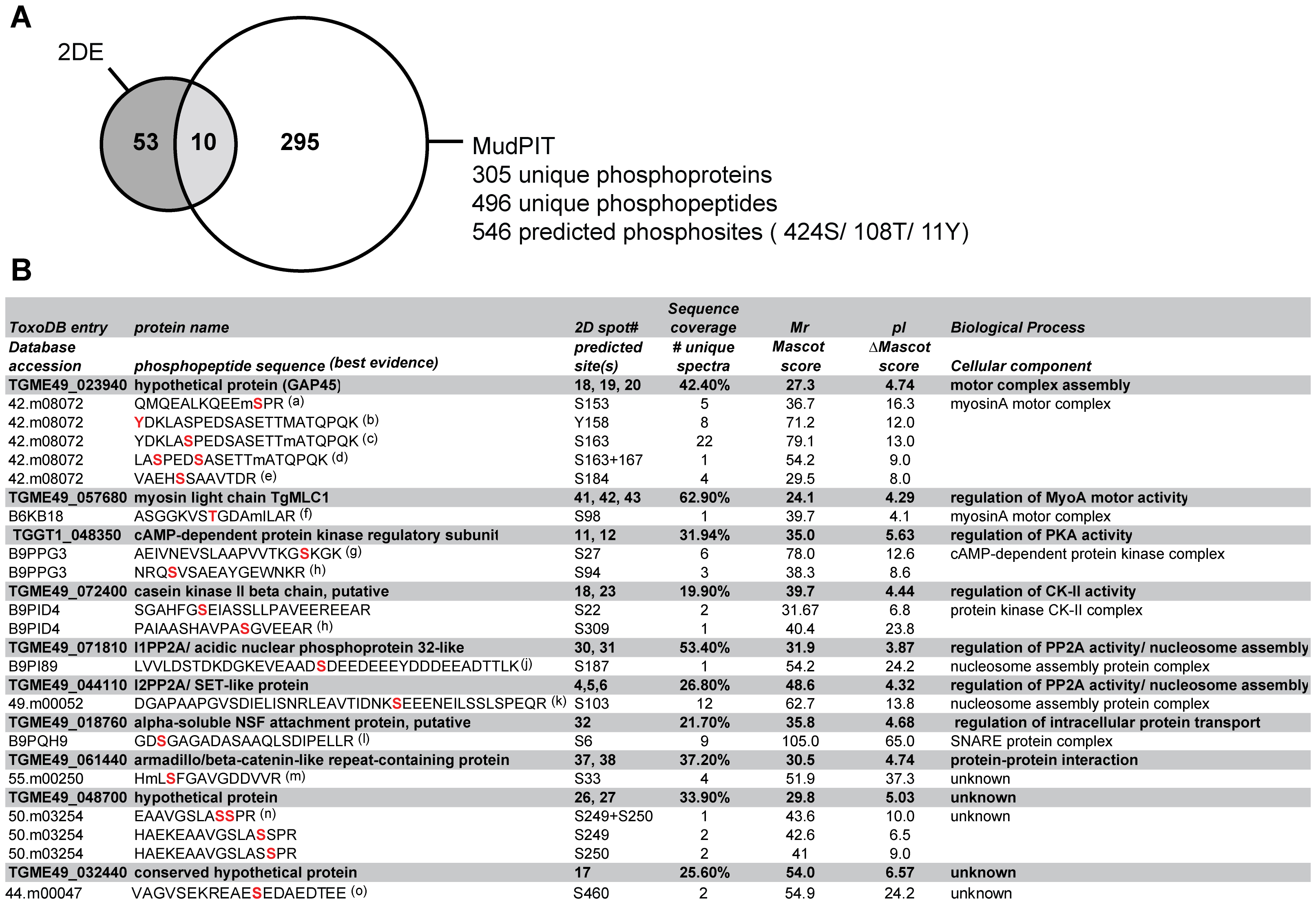Functional annotation analysis of <i>Toxoplasma</i> phosphoproteins identified by MudPIT and comparison of proteomics strategies.