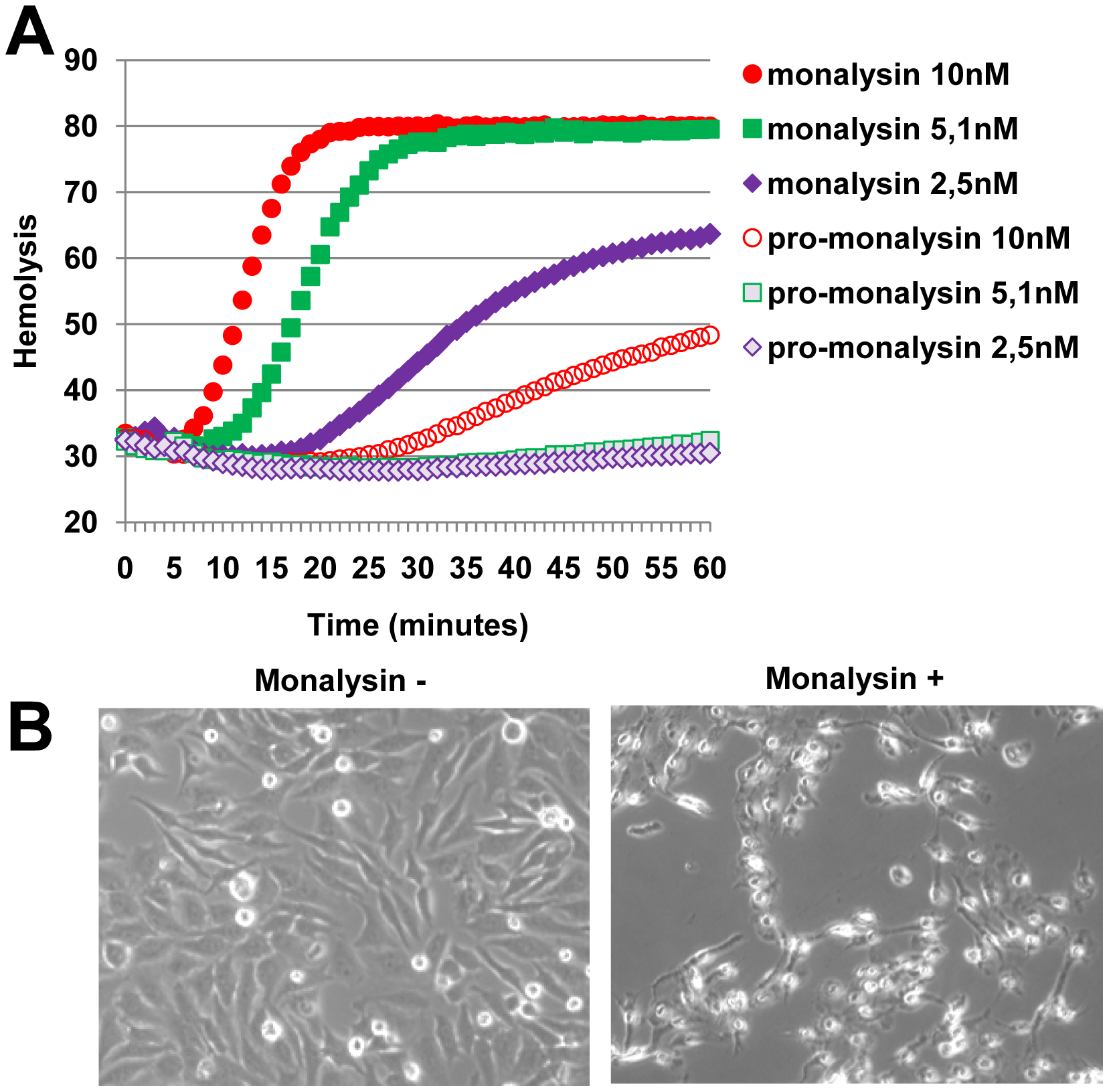 Monalysin hemolytic activity and cytotoxicity towards mammalian cells.