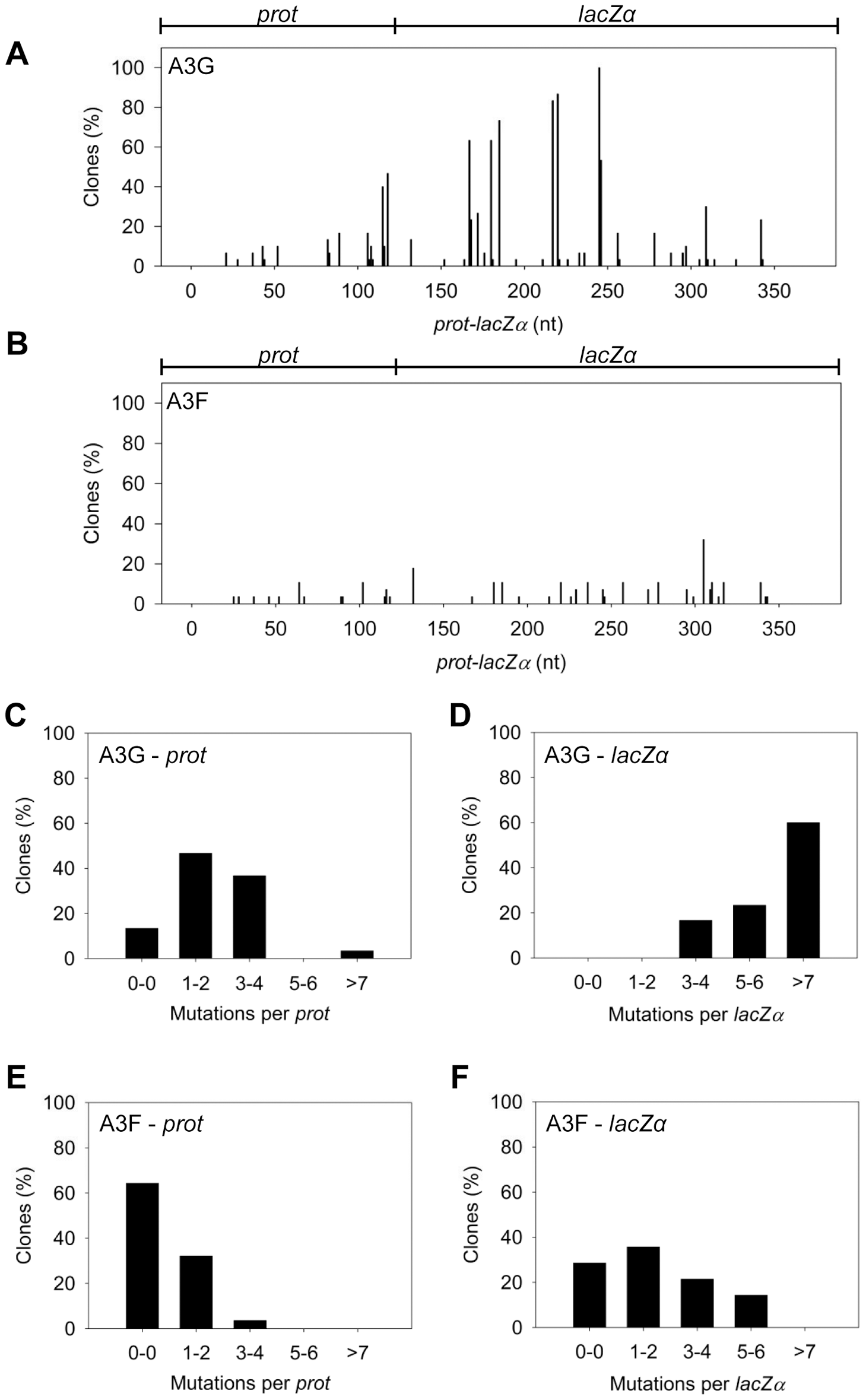 A3F exhibits low mutagenic potential in a model HIV replication system.