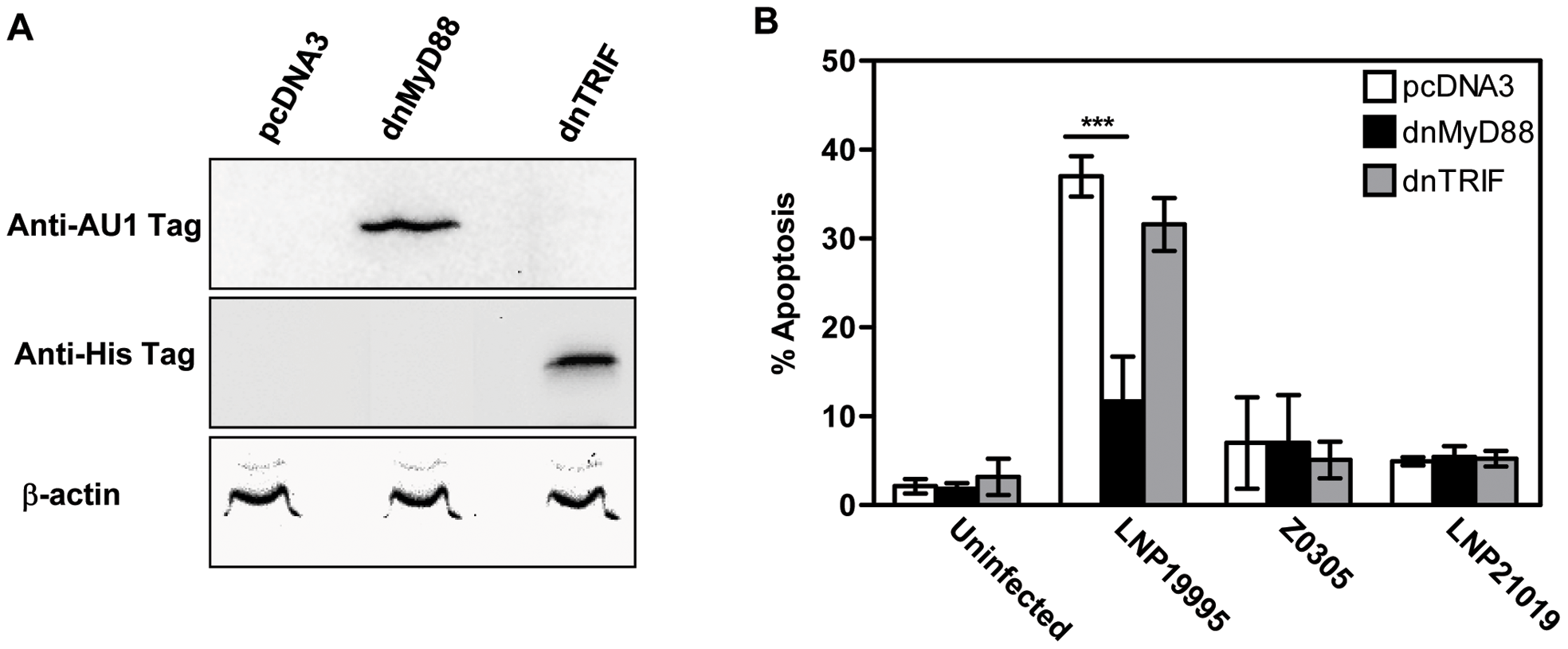 Expression of dnMyD88 but not dnTRIF inhibits ST-11-induced apoptosis.