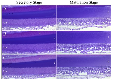 Figure 10. 
