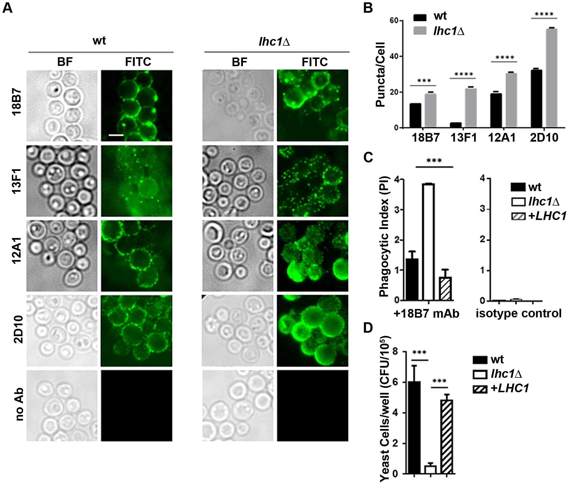wt and <i>lhc1</i>Δ mutant strains of <i>C. neoformans</i> differ in antibody binding and antibody mediated phagocytosis by a J774.16 macrophage-like cell line.