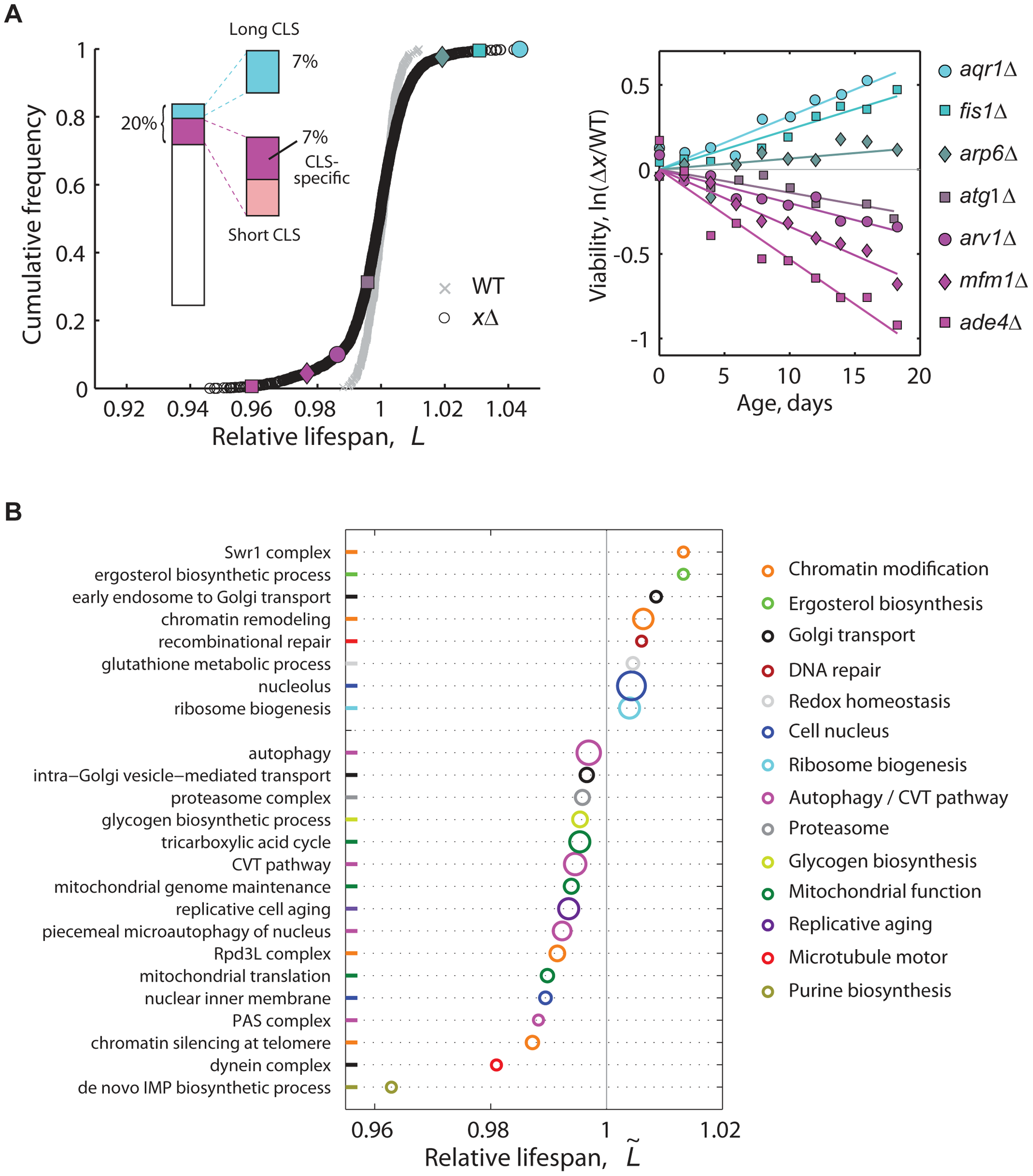 High-resolution genome-wide screening of yeast CLS.