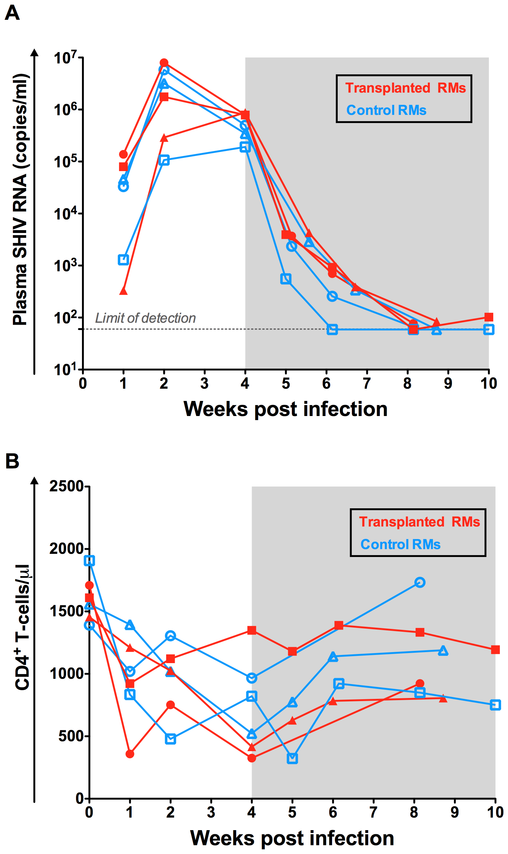 Virologic and immunologic characteristics pre-transplant.