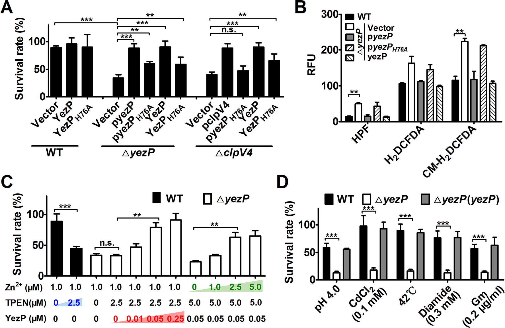 The activity of YezP in <i>Yptb</i> resistance to stresses.