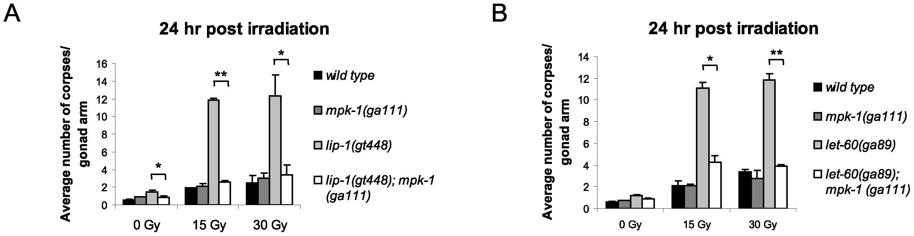 The enhanced apoptosis in <i>lip-1(gt448)</i> and <i>let-60(ga89)</i> mutant worms is due to enhanced MPK-1 activity.