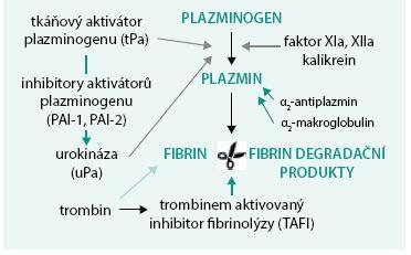 Schéma 2. Fibrinolýza