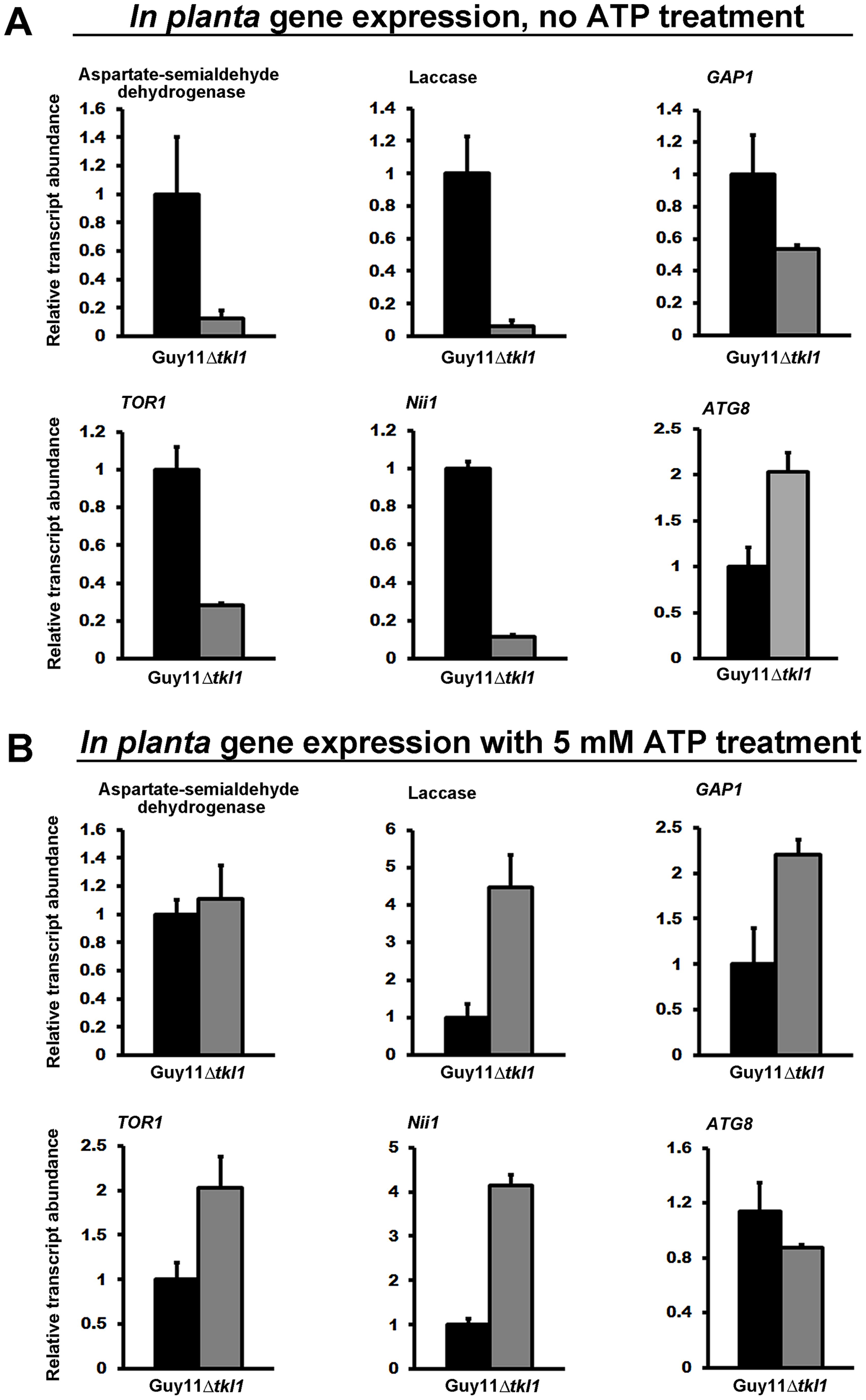 <i>TKL1</i> regulates the expression of TOR pathway read-out genes, via ATP, <i>in planta</i>.