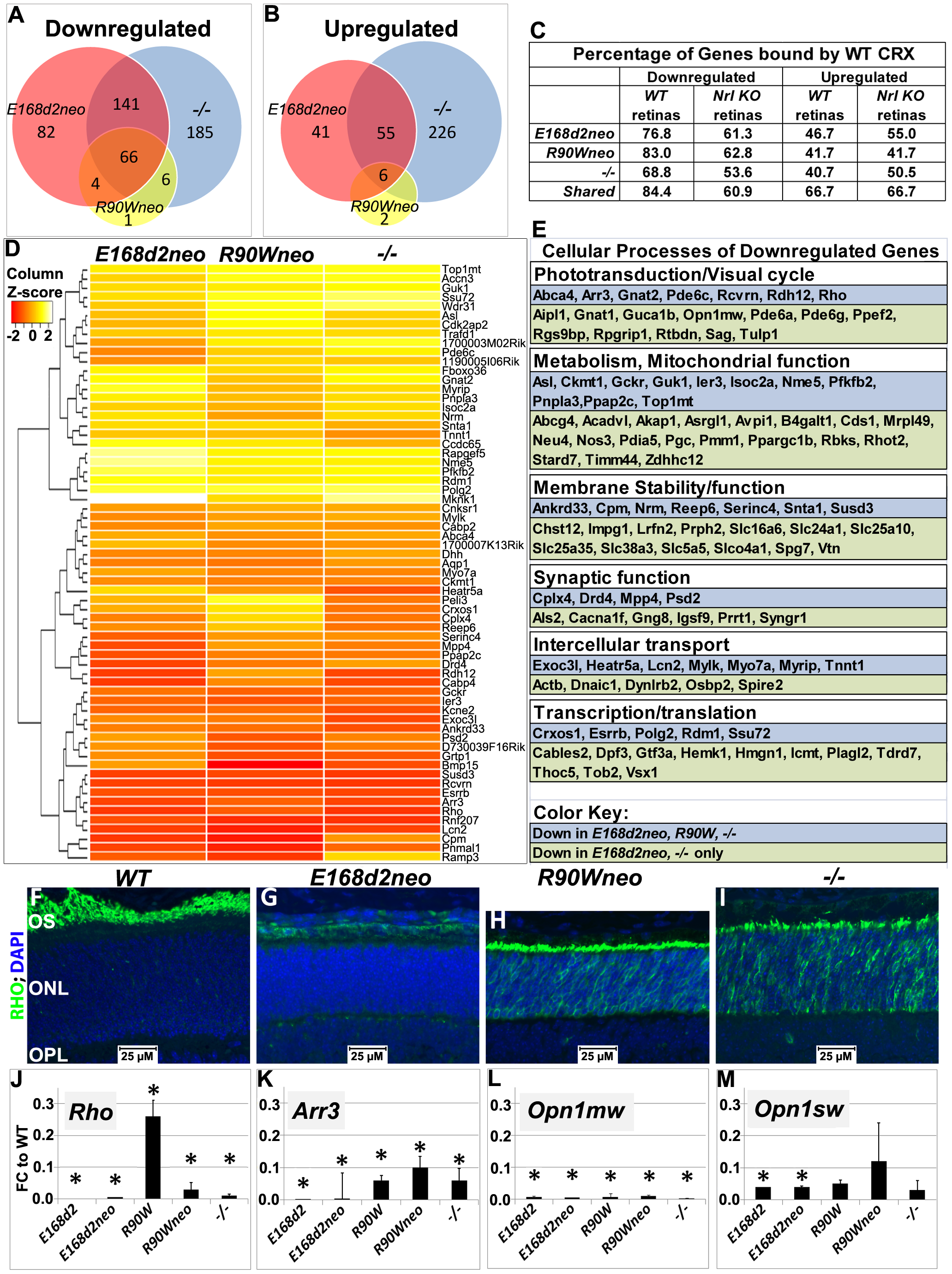 Homozygous <i>E168d2</i>, <i>R90W</i> and −/− mice show graded changes in retinal gene expression.