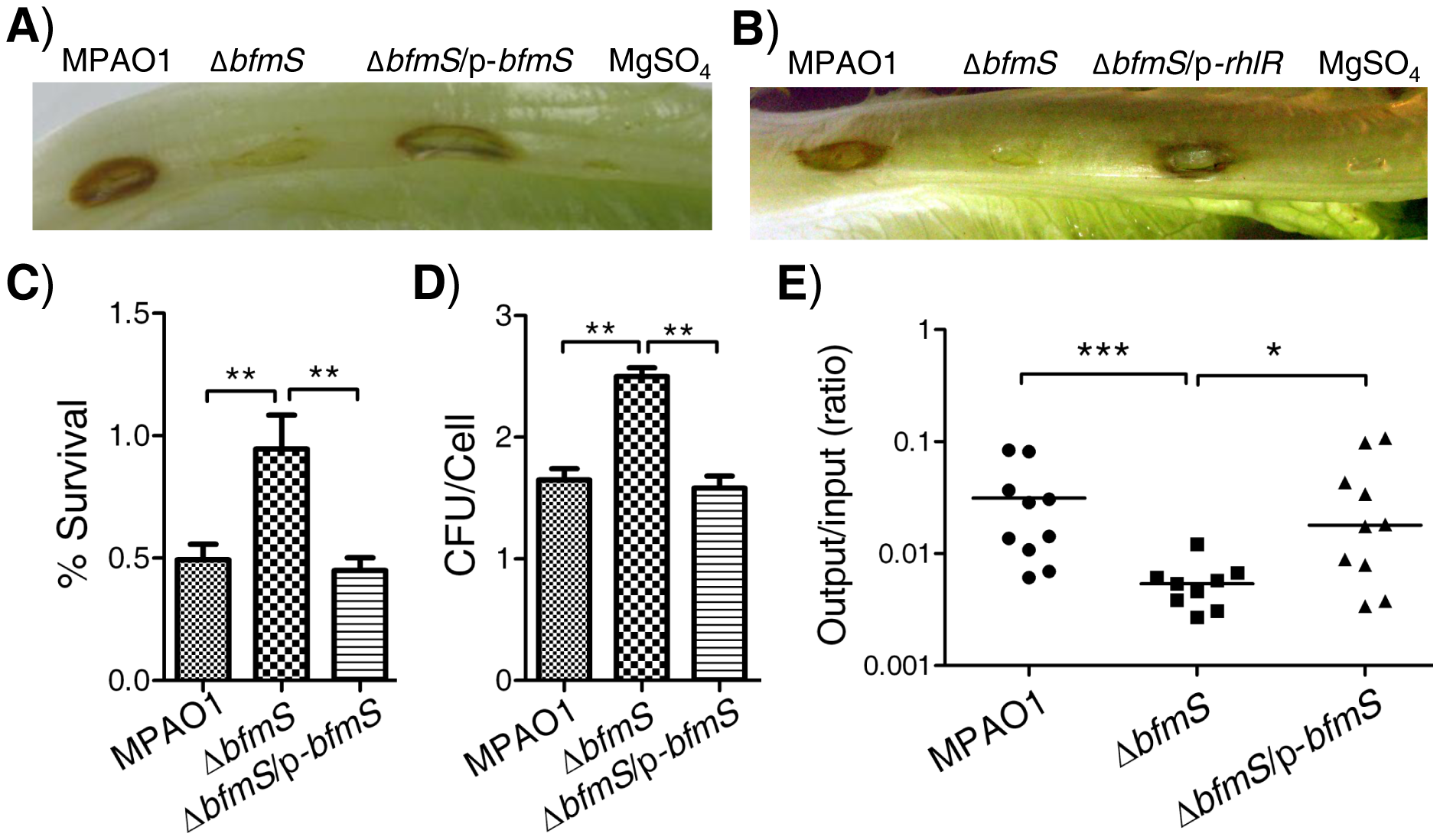 Effect of <i>bfmS</i> deletion on bacterial virulence and the ability of <i>P. aeruginosa</i> to adapt to the host.