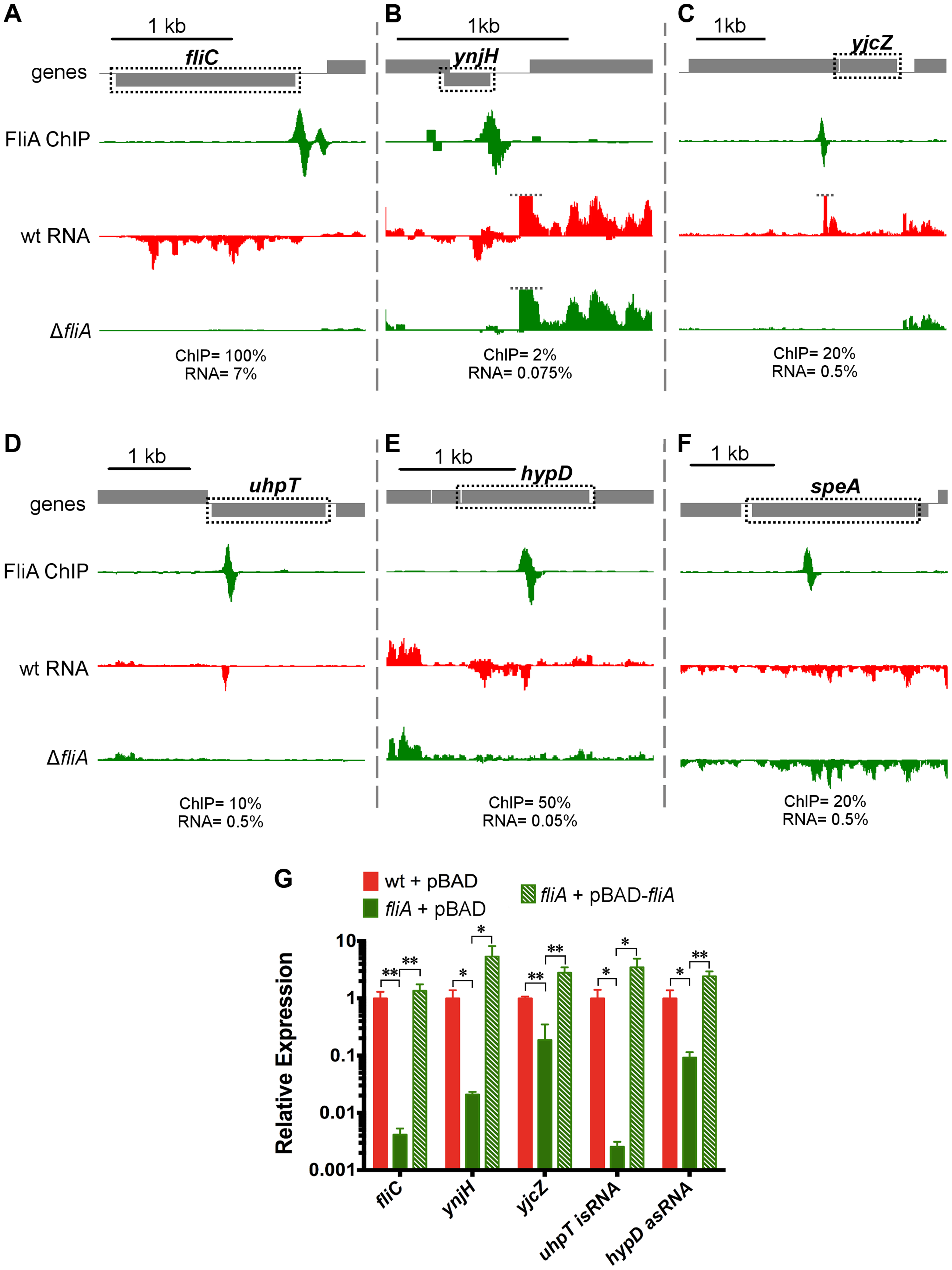 FliA binding and regulation at known and novel targets.