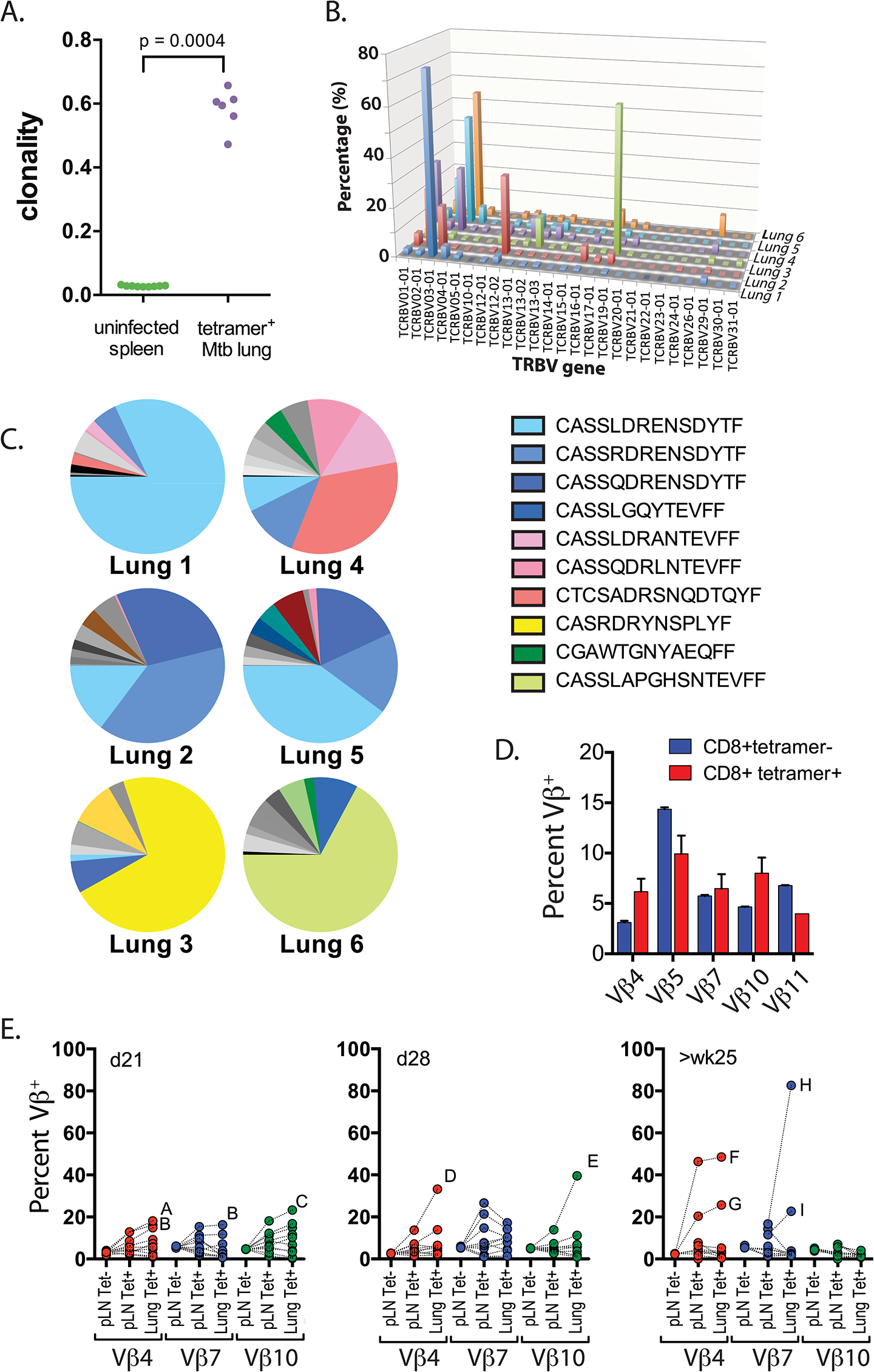 Clonal expansions of CD8+ T cells specific for the immunodominant antigen TB10.4.
