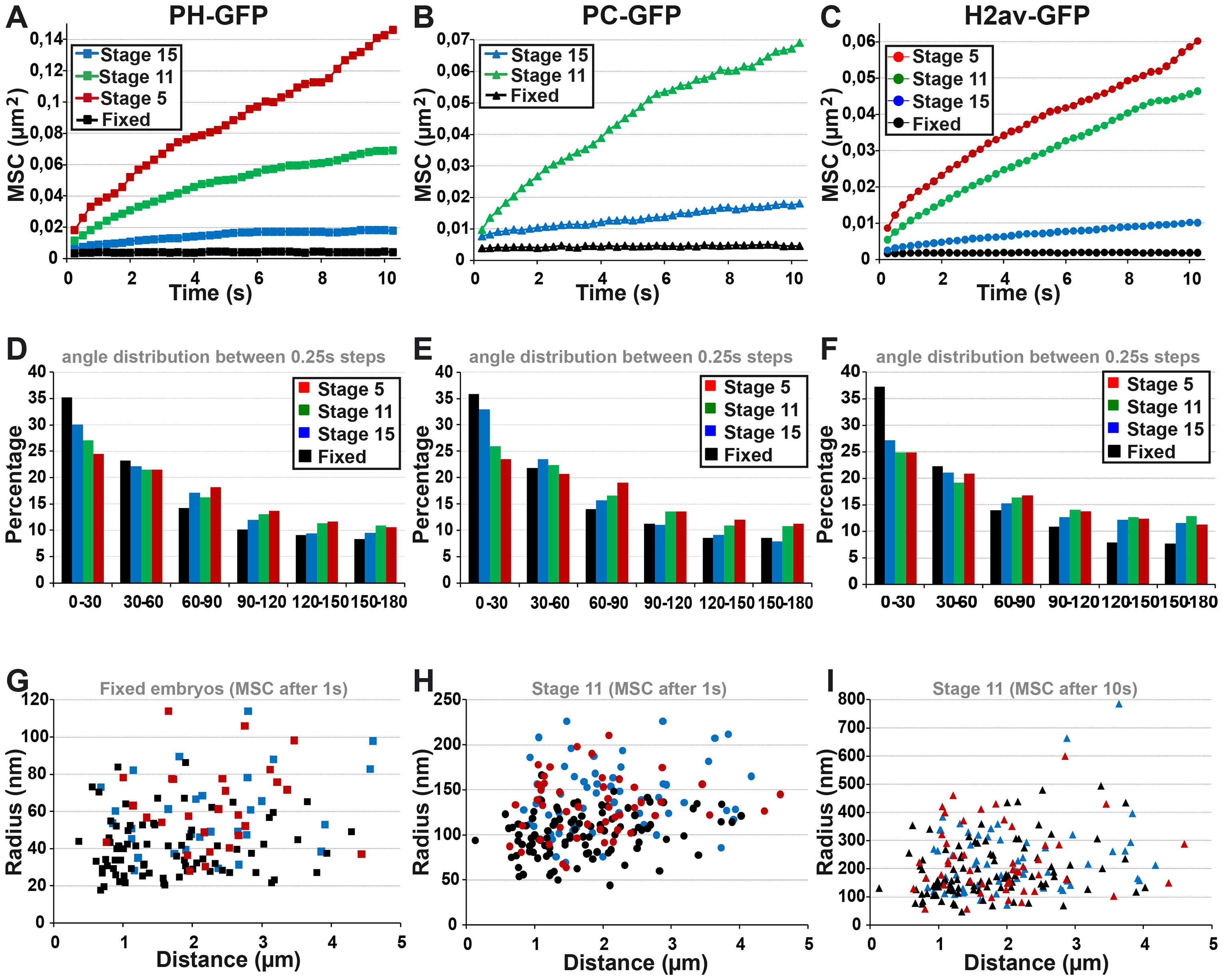 The fast local motion of PC bodies is less constrained than that of chromatin domains.