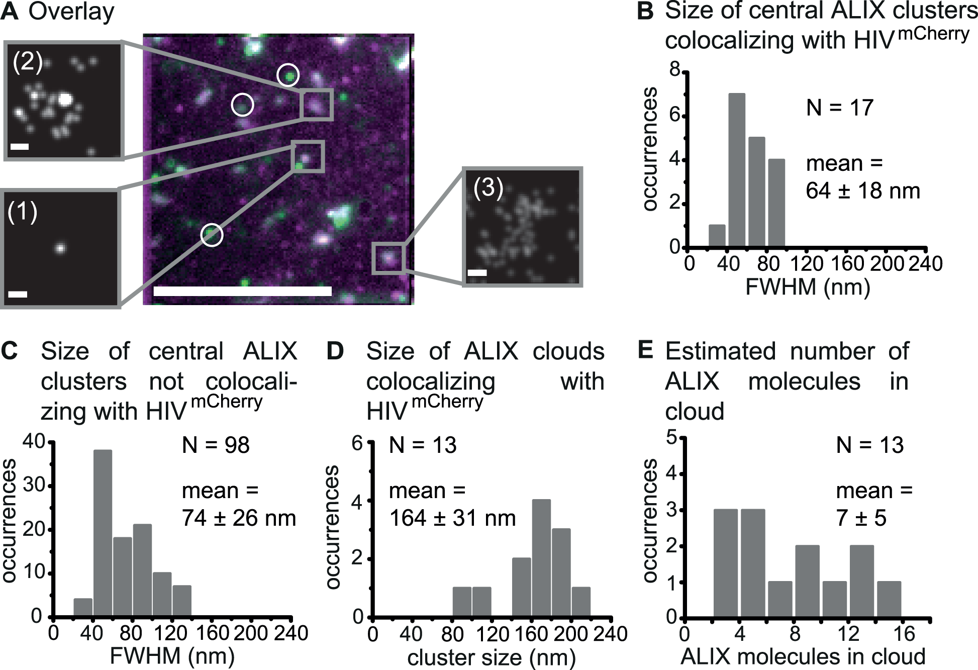 Super-resolution imaging of endogenous ALIX at HIV-1 assembly sites.