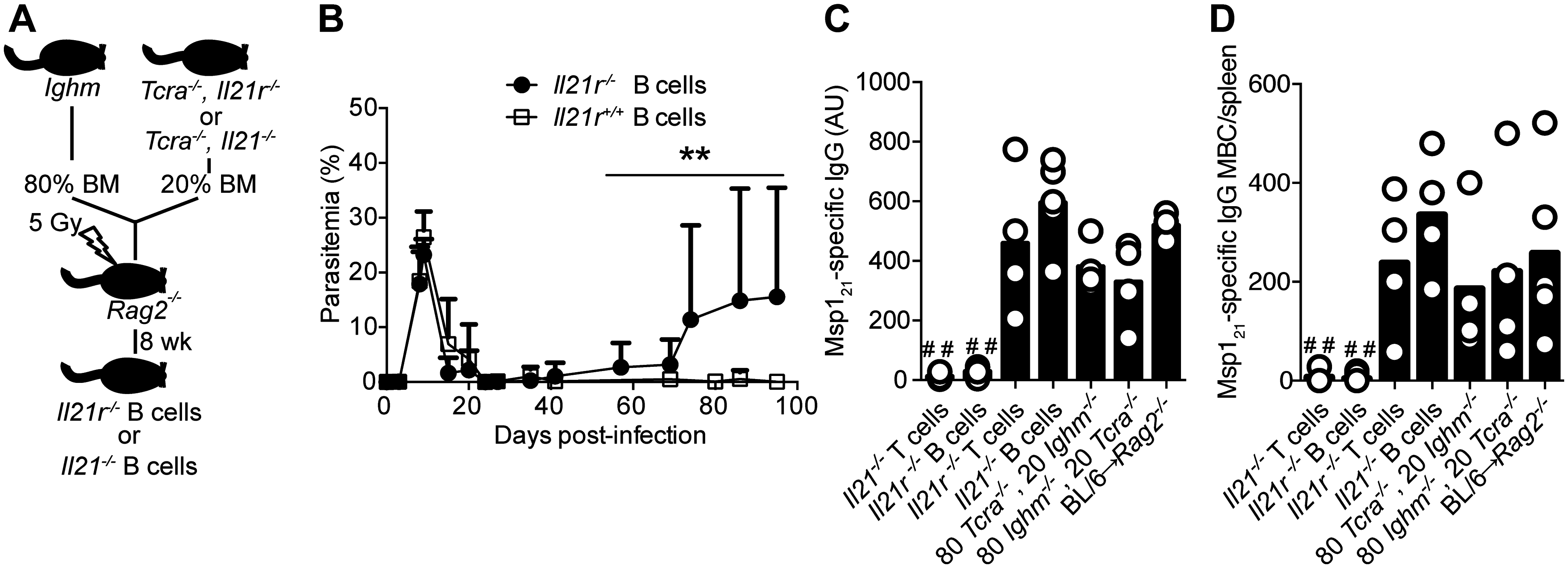 Mice bearing IL-21R-deficient B cells fail controlling chronic <i>P</i>. <i>chabaudi</i> infection and activating <i>P</i>. <i>chabaudi</i>-specific-IgG-responses.