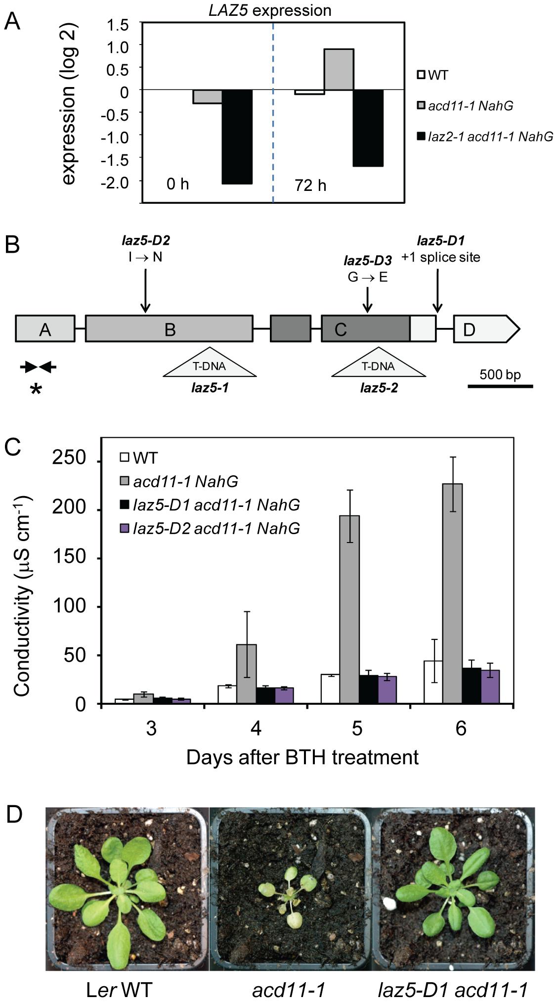 <i>acd11</i> autoimmunity requires LAZ5, a TIR-NB-LRR immune receptor.