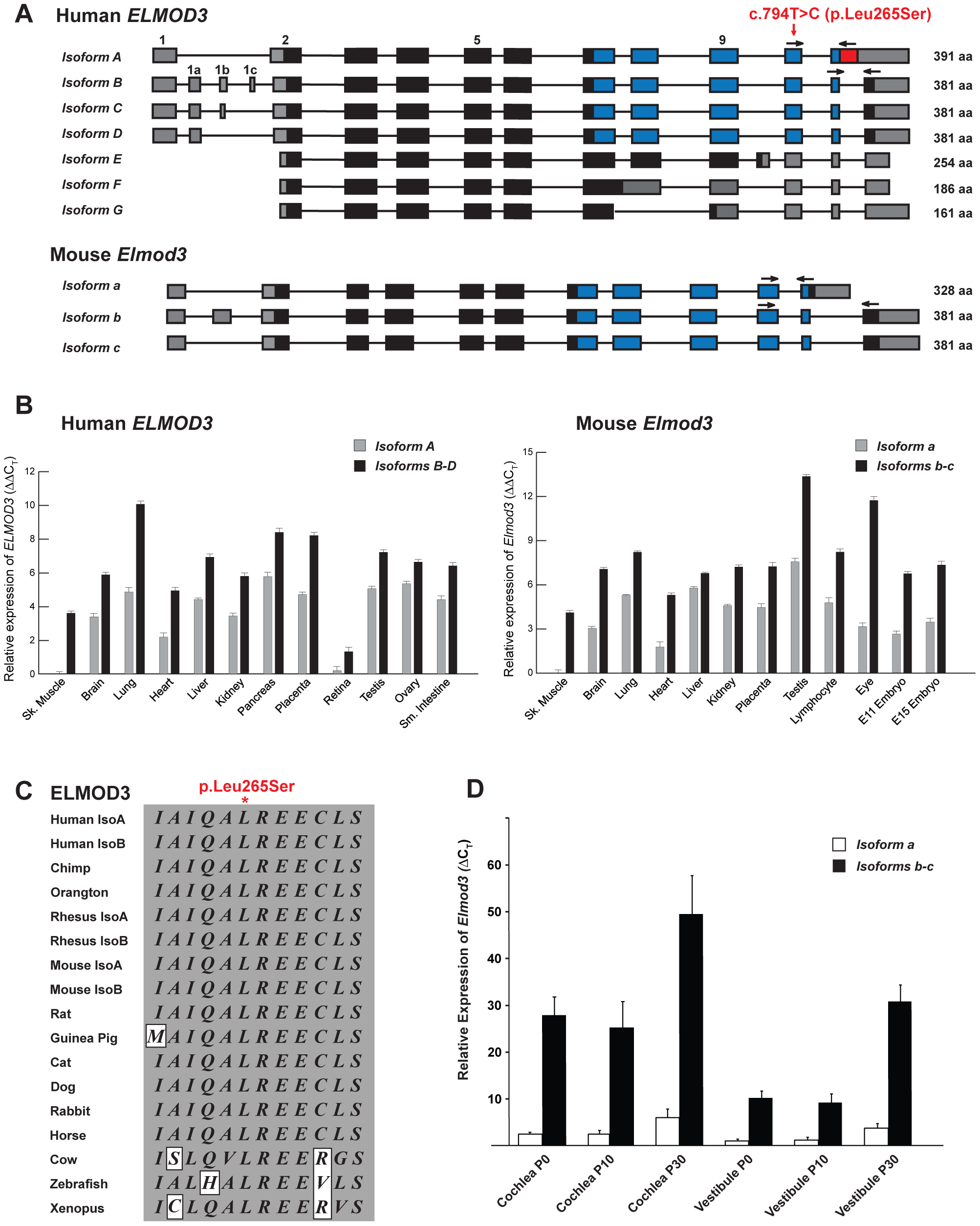 The transcripts and expression profiles of the genes that encode ELMOD3 in humans and mice.