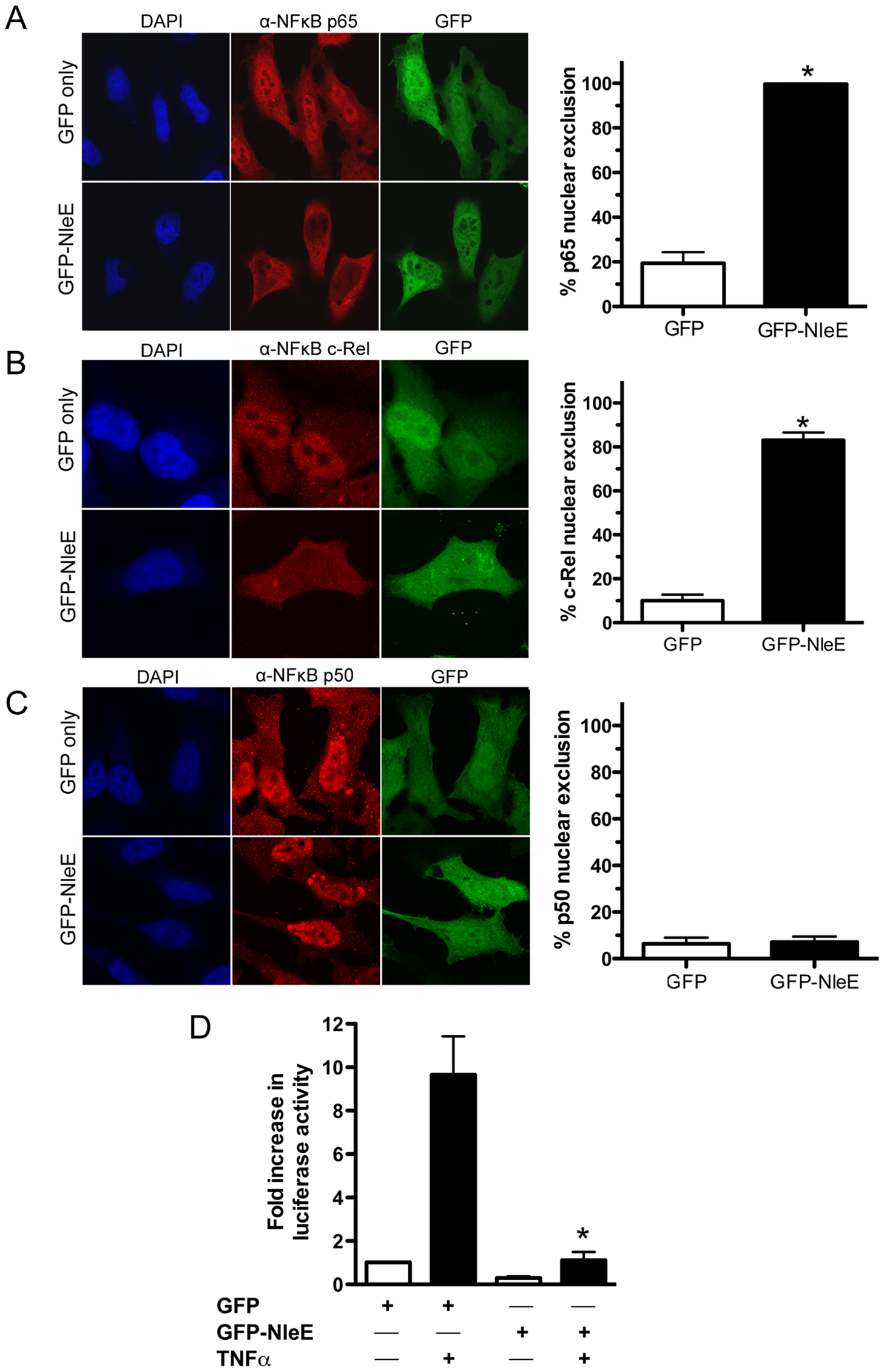 Effect of ectopically expressed NleE on NF-κB activation.