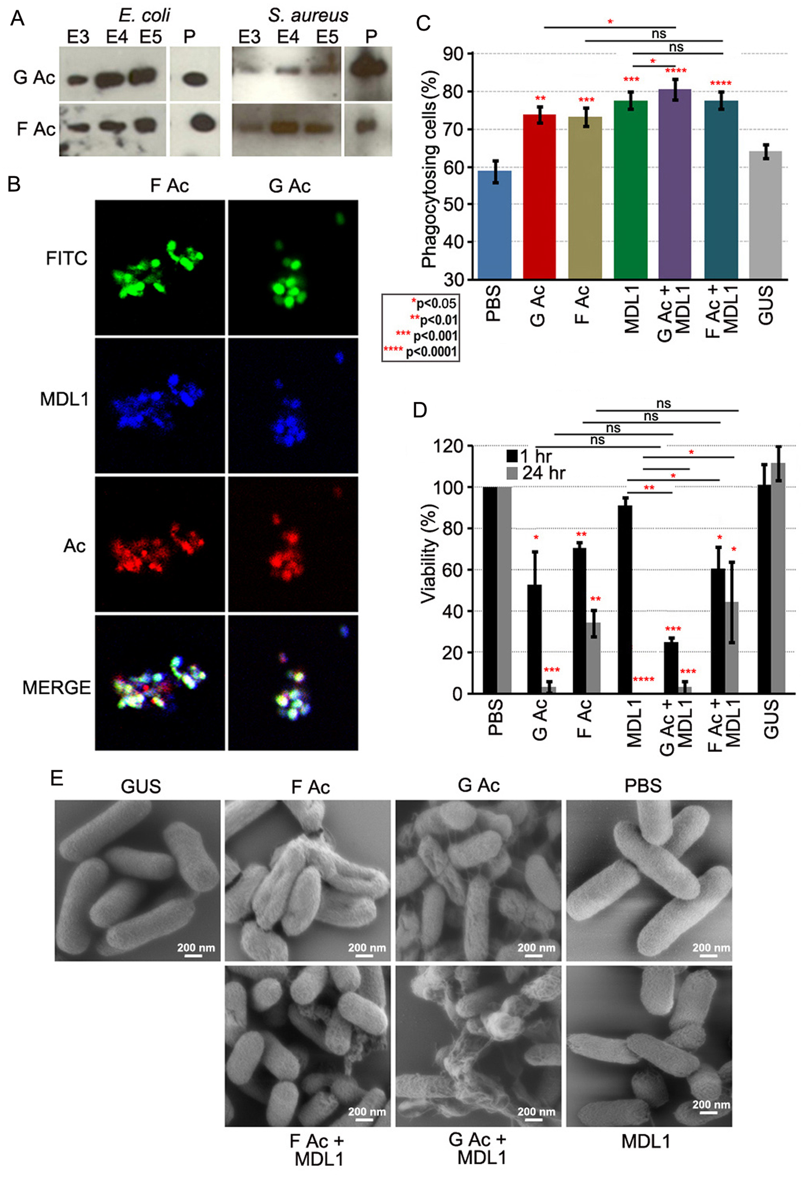 Globular and filamentous actin display different immune properties.