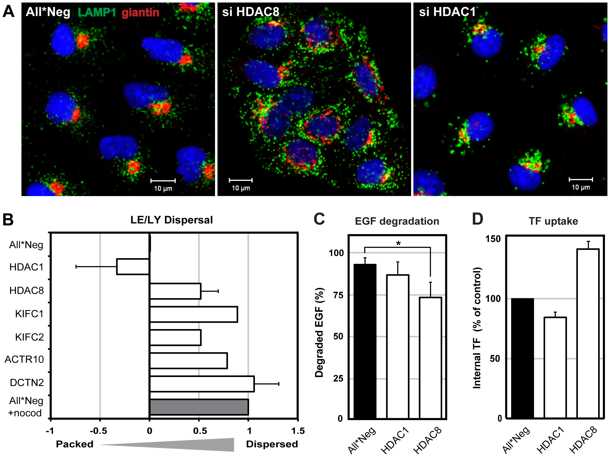 HDAC8 depletion induces dispersal of LE/Lys.