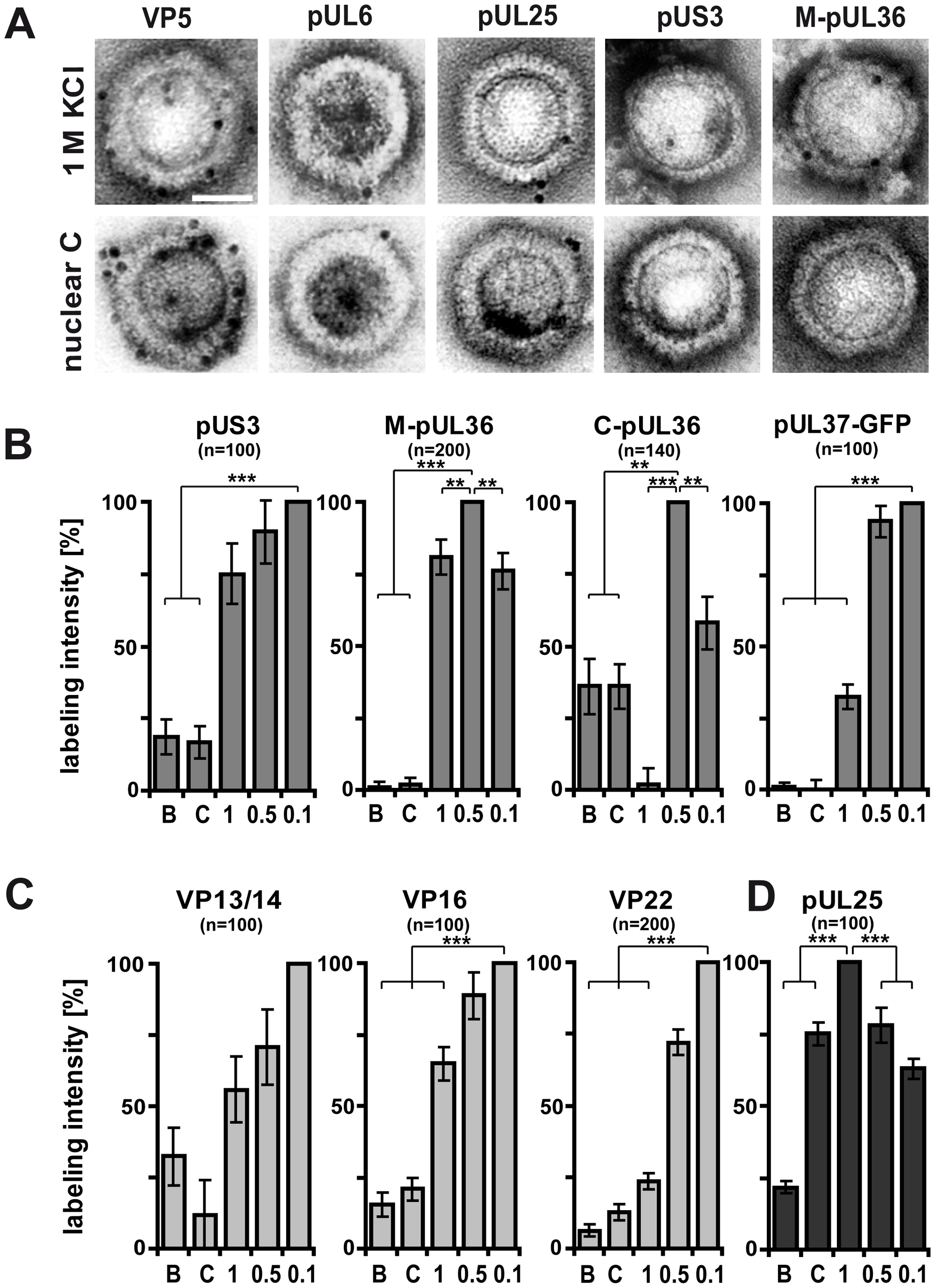 Generation of different HSV1 capsid surfaces during isolation.