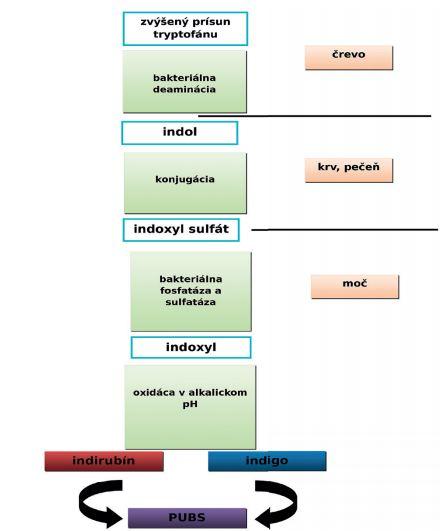 Patogenéza vzniku PUBS (dle 2)