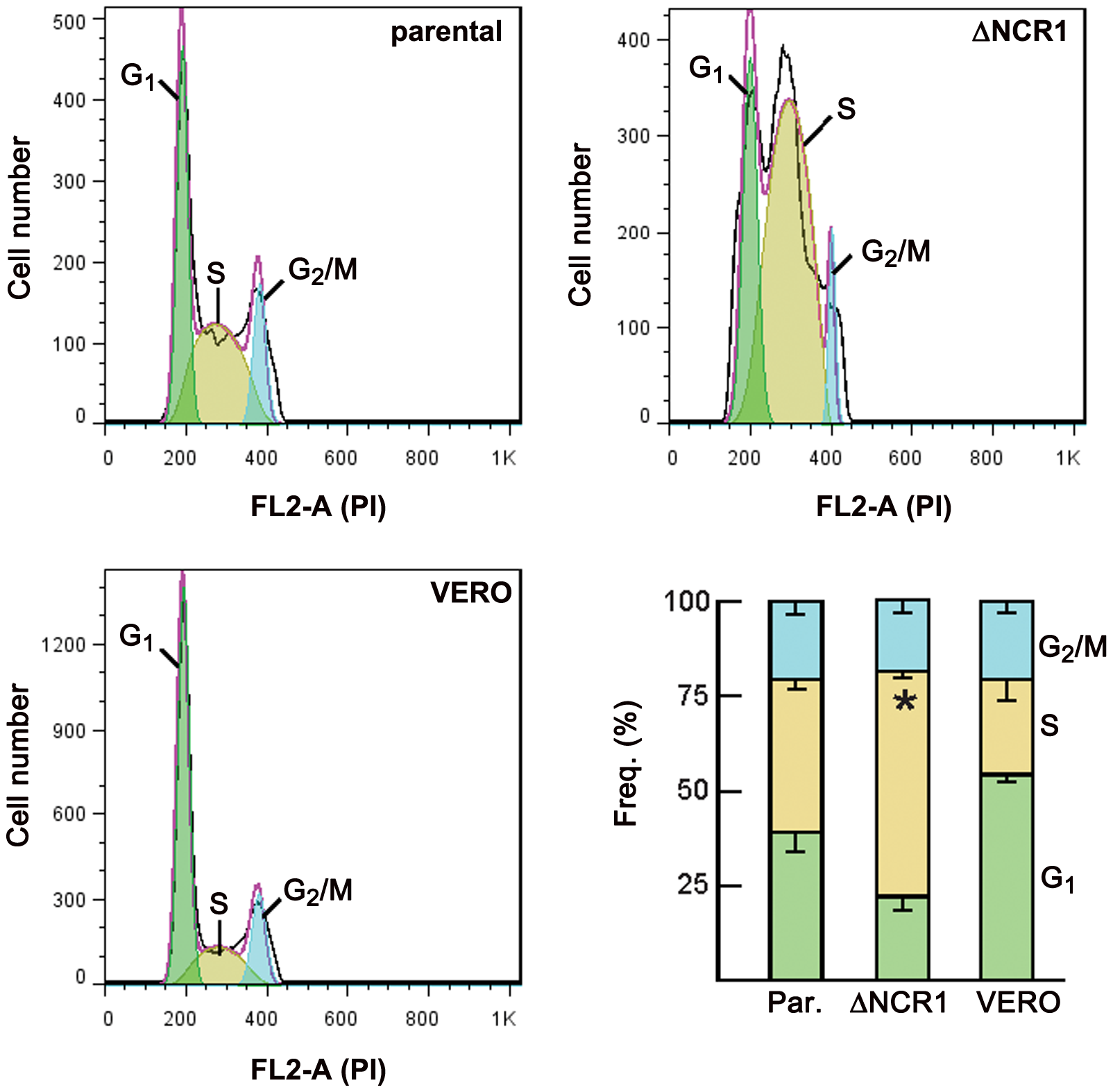 Cell cycle analysis of the ΔNCR1 and parental strains.