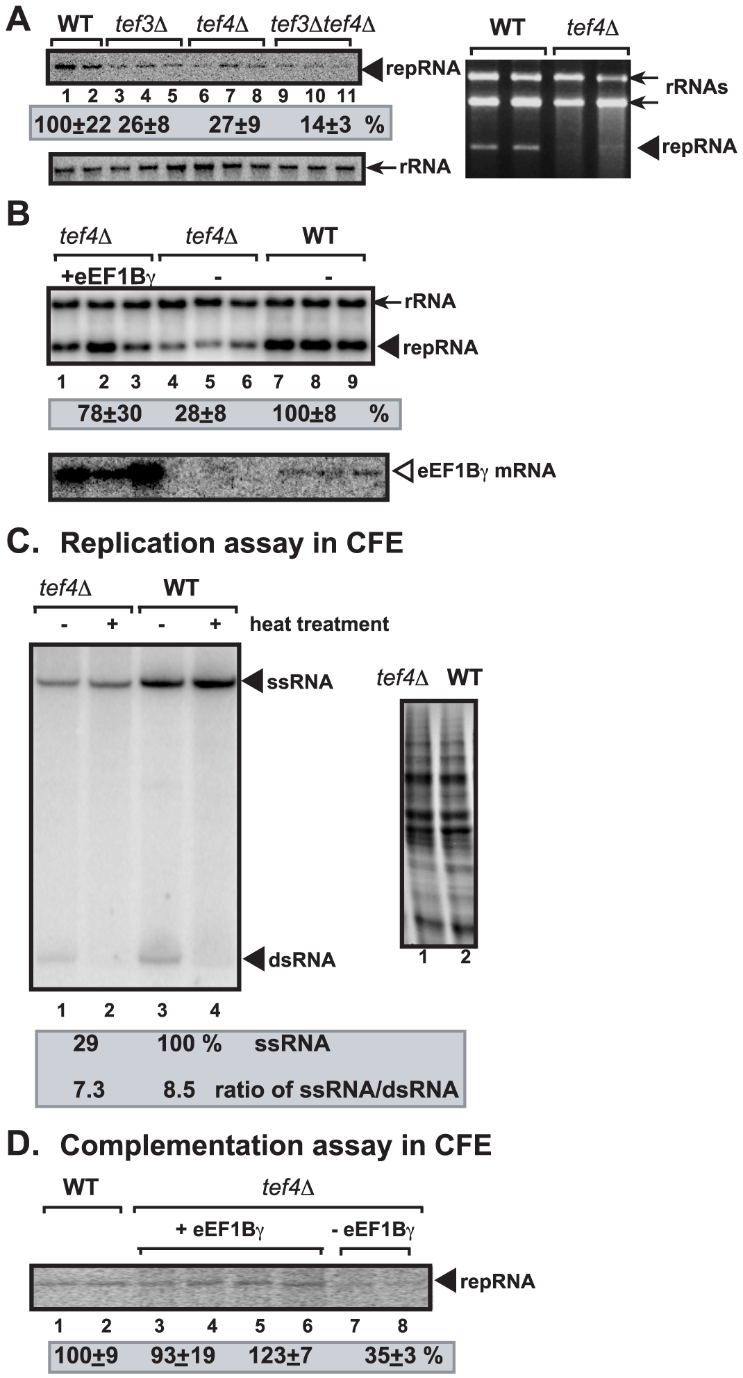 The effect of deletion of the <i>TEF3</i> and <i>TEF4</i> yeast genes coding for eEF1Bγ on TBSV repRNA accumulation in yeast and in a cell-free extract.