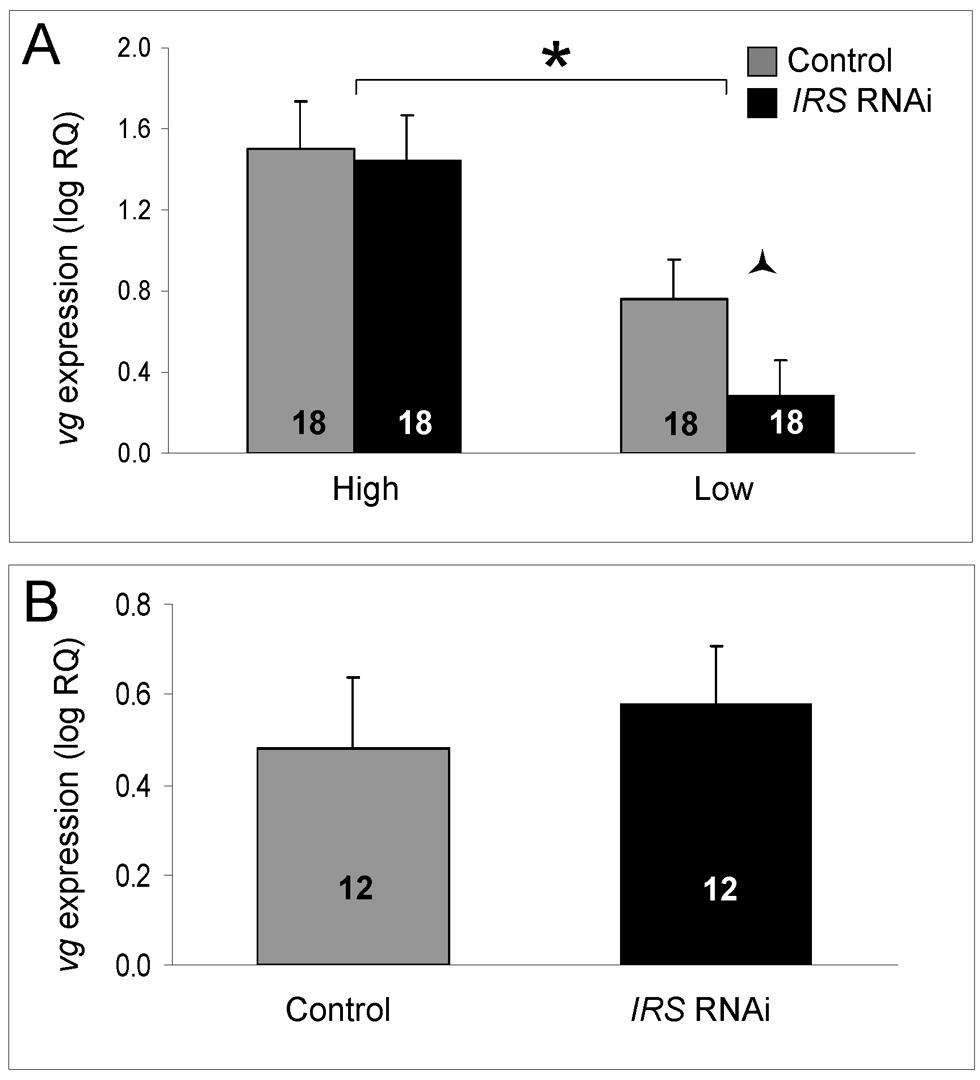 Effect of <i>IRS</i> on <i>vitellogenin</i> mRNA.