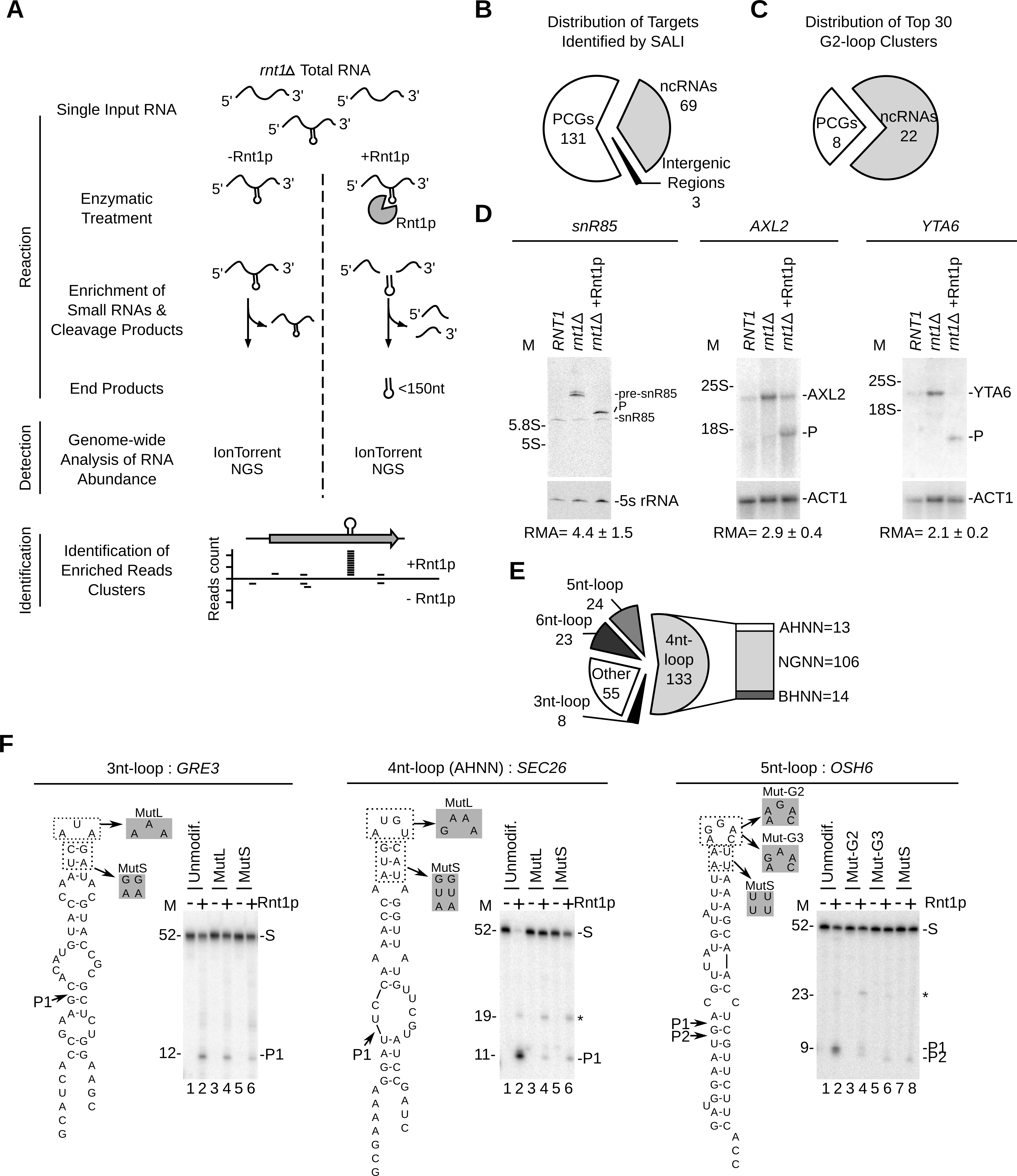Sequence assisted identification of Rnt1p cleavage signals.