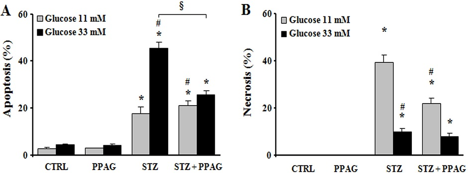 In vitro beta cell protection from STZ by PPAG. INS-1E cells were pre-treated with 30 μM PPAG for 16 hours, exposed to 1 mM streptozotocin for 1 hour and then cultured for 23 hours in medium containing 11 or 33 mM glucose with or without PPAG (n = 3). The percentage of apoptotic (A) and necrotic cells (B) was determined following staining with the nuclear dyes propidium iodide and Hoechst 33342. A minimum of 500 cells was counted for each condition. Percentage of apoptotic (A) and necrotic cells (B). *p<0.05 against control (CTRL). #p<0.05 against STZ-treated cells in 11 mM glucose. §p<0.05 as indicated.