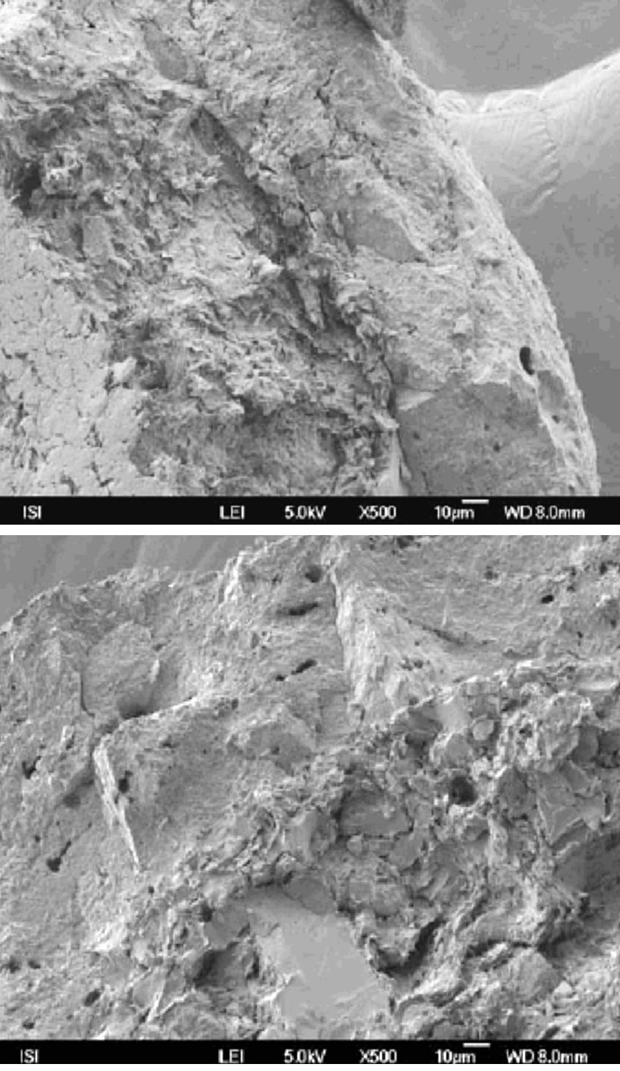 Fig. 3. The cross-section of the layered pellet (left) containing the MCC and LM/ MCC (right) as observed under the scanning electron microscope (magnification 500×)