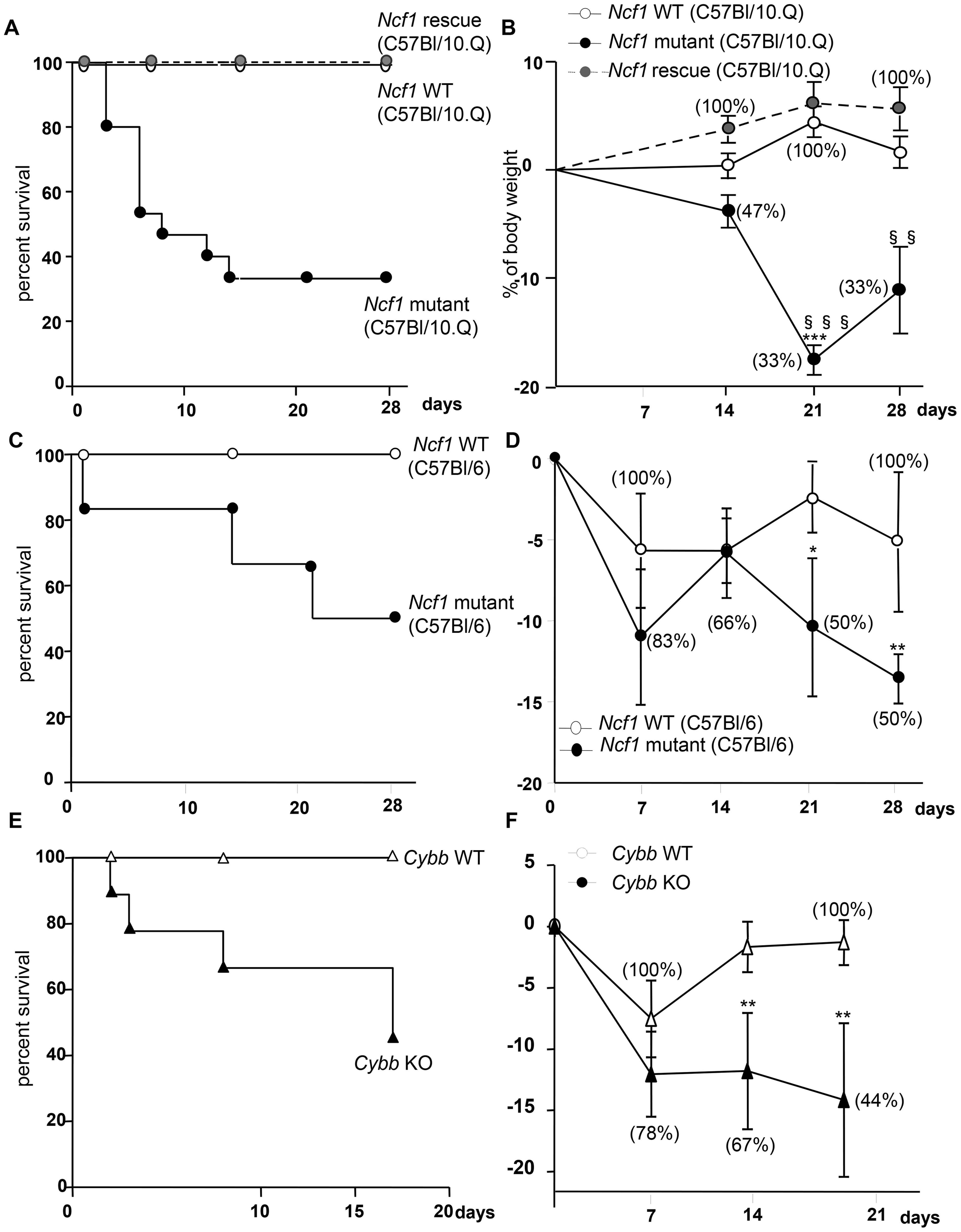 Impact of CGD mutation on mortality and weight loss in response to BCG infection.