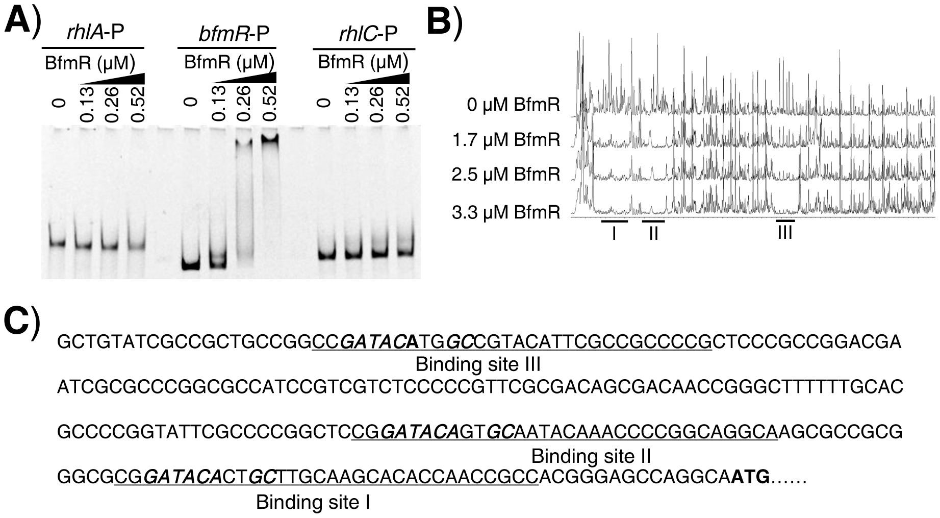Direct binding of BfmR to its own promoter.