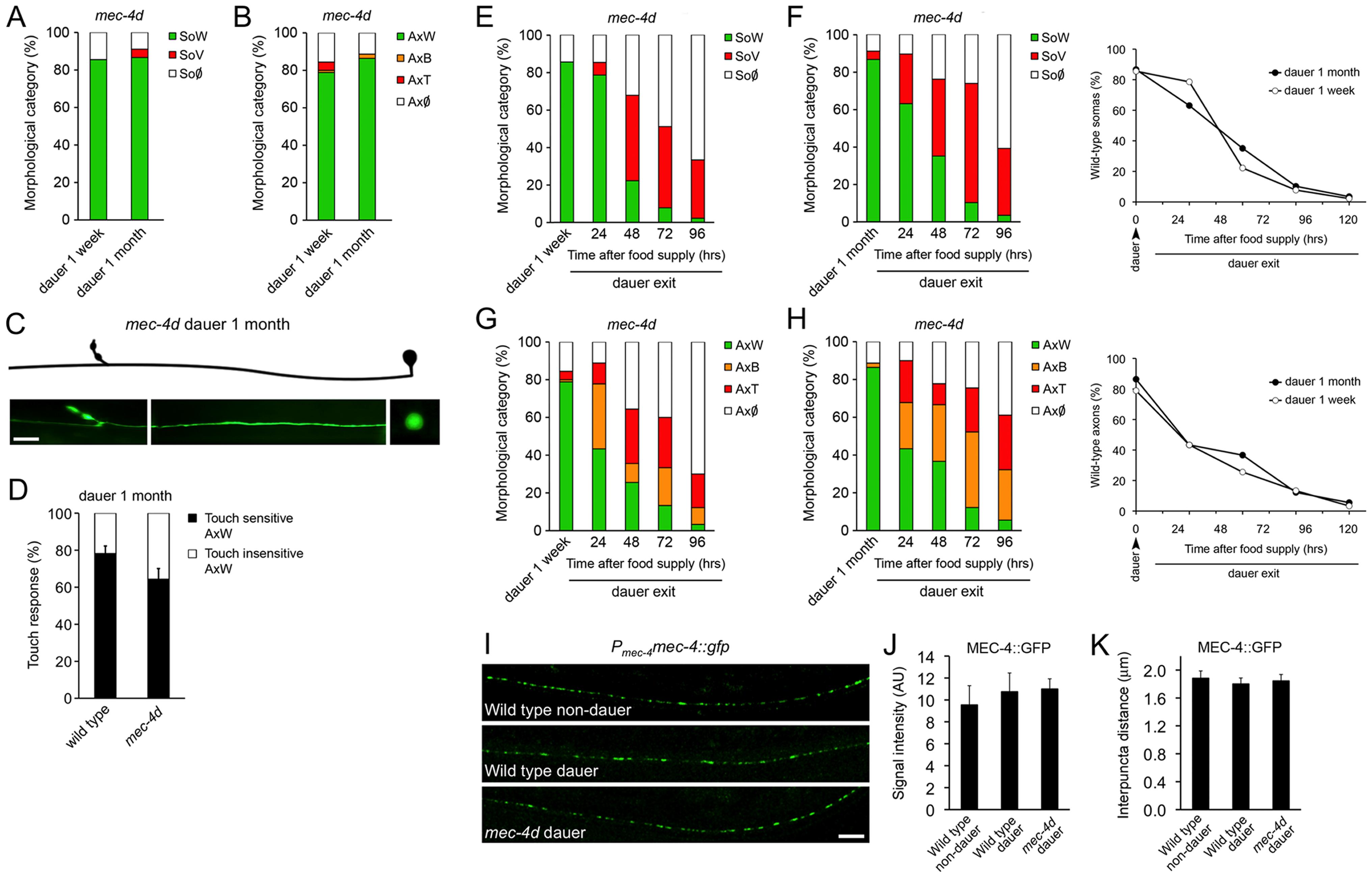 <i>C. elegans</i> dauer state prevents neuronal degeneration triggered by <i>mec-4d</i>.