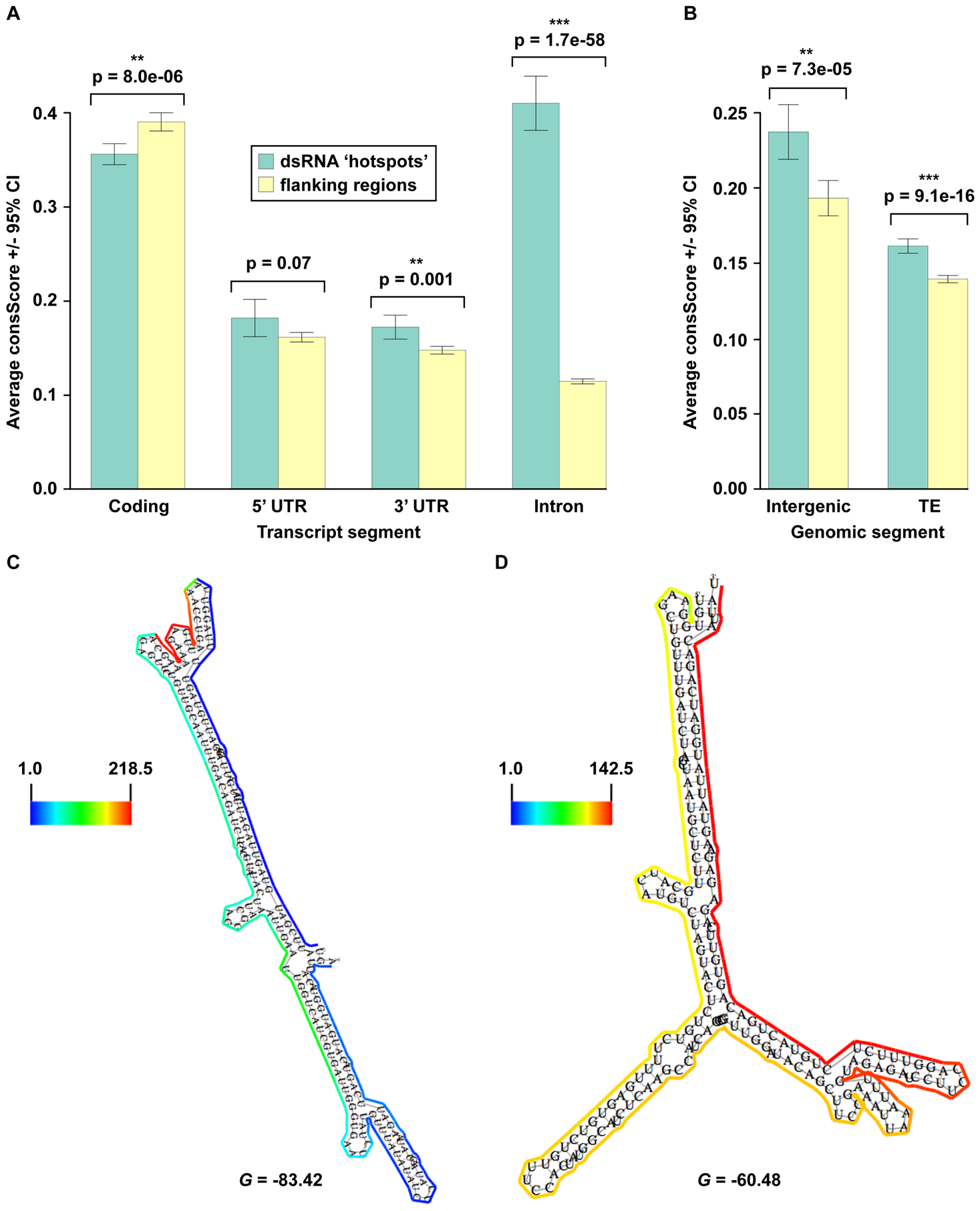 Identification of widespread, conserved functionality within non-coding portions of mRNA (introns, 3′ and 5′ UTRs), intergenic regions, and transposons.