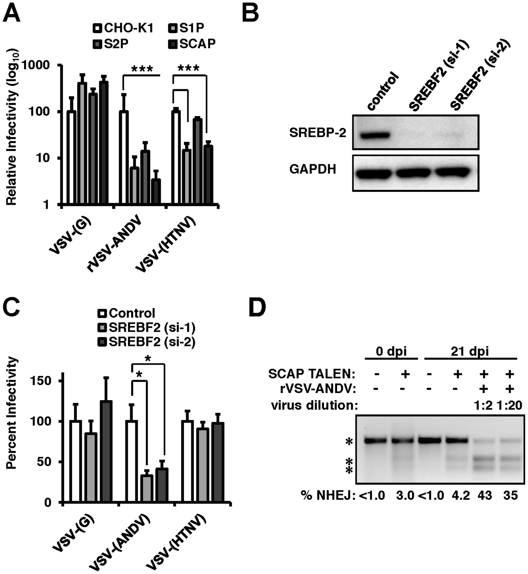 The sterol regulatory complex promotes infection of ANDV.