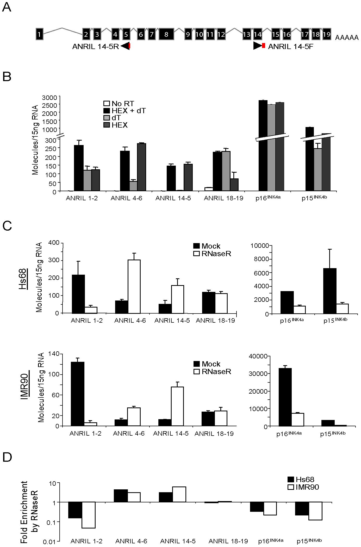 <i>ANRIL 14-5</i> and <i>4-6</i> are circular RNAs.