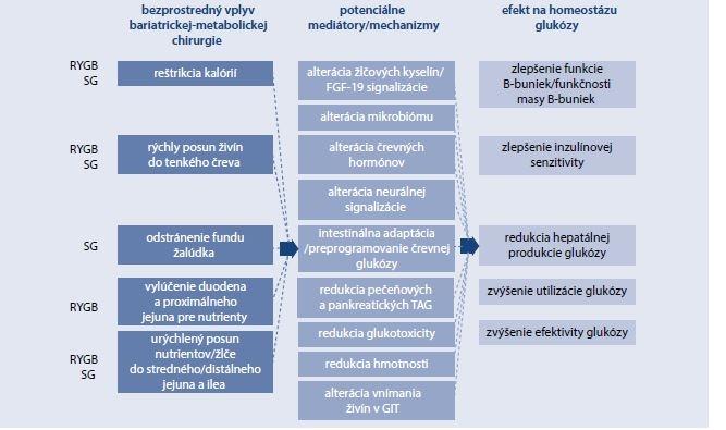 Schéma 17.2 | Mechanizmy vedúce k zlepšeniu homeostázy glukózy po bariatrickej/metabolickej chirurgii u diabetikov 2. typu