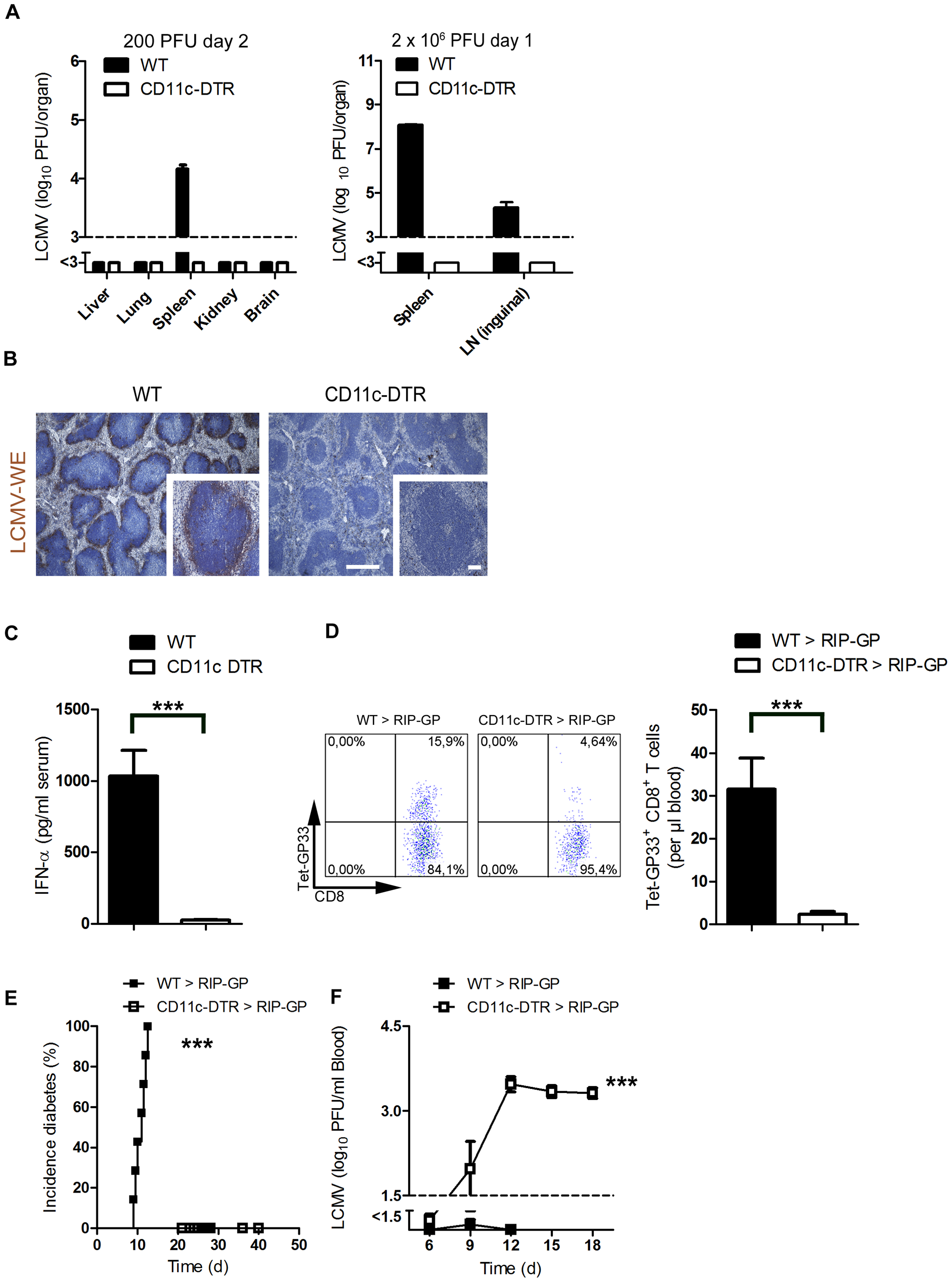 Depletion of dendritic cells blunted early viral replication and prevented autoimmune diabetes.
