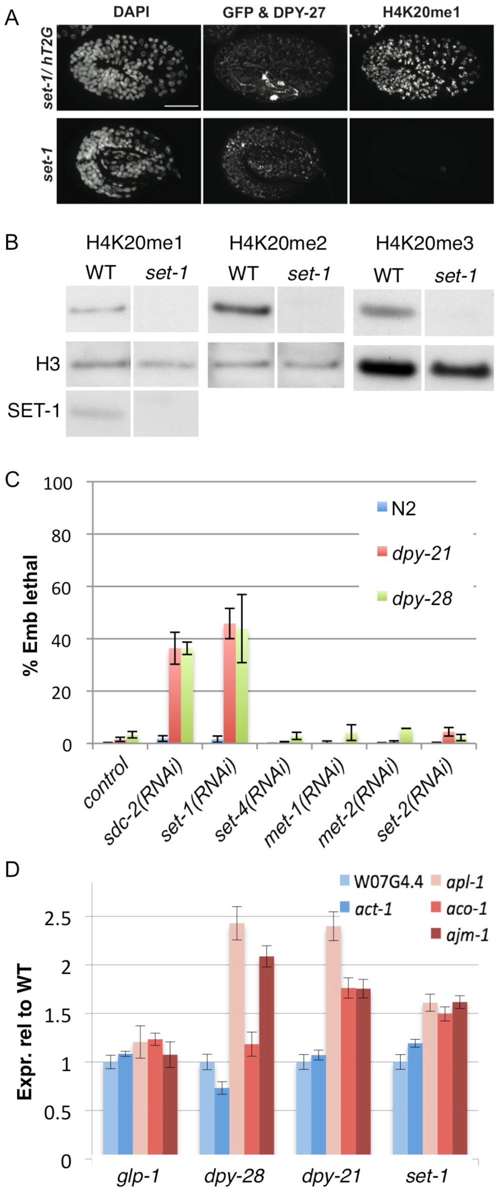 The H4K20me1 methyltransferase SET-1 genetically interacts with dosage compensation mutants and is required for repression of X-linked gene expression.