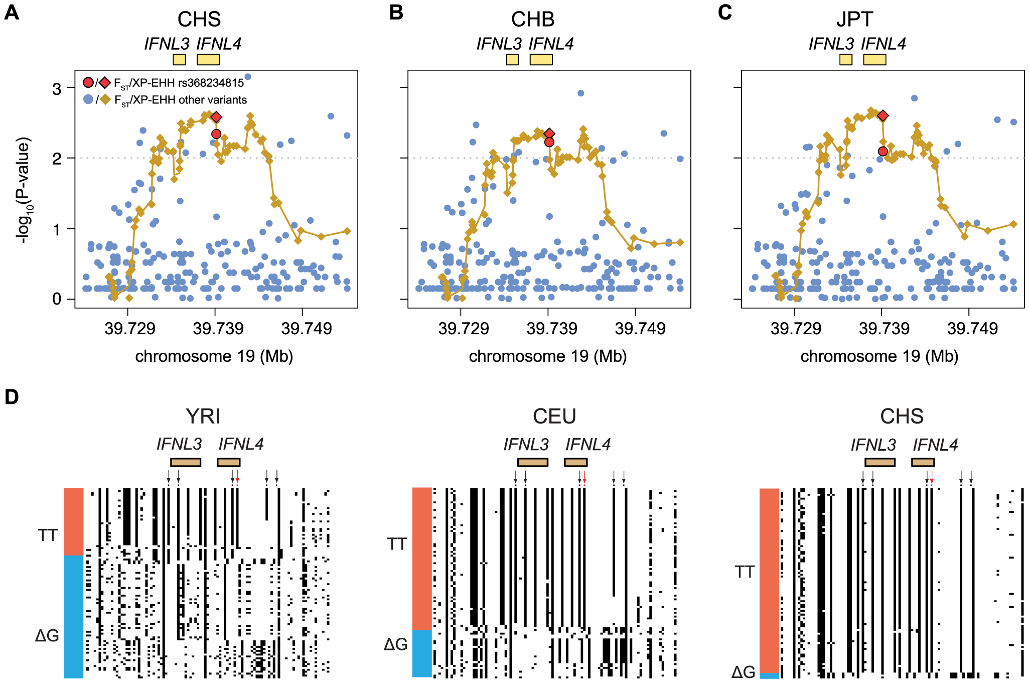 Empirical P-values of the F<sub>ST</sub> and XP-EHH analysis (depicted as dots or diamonds, respectively) in the 30 Kb genomic locus around <i>IFNL4</i> (chr19:39724153–39754153) for (A) CHS, (B) CHB, and (C) JPT using YRI as background.