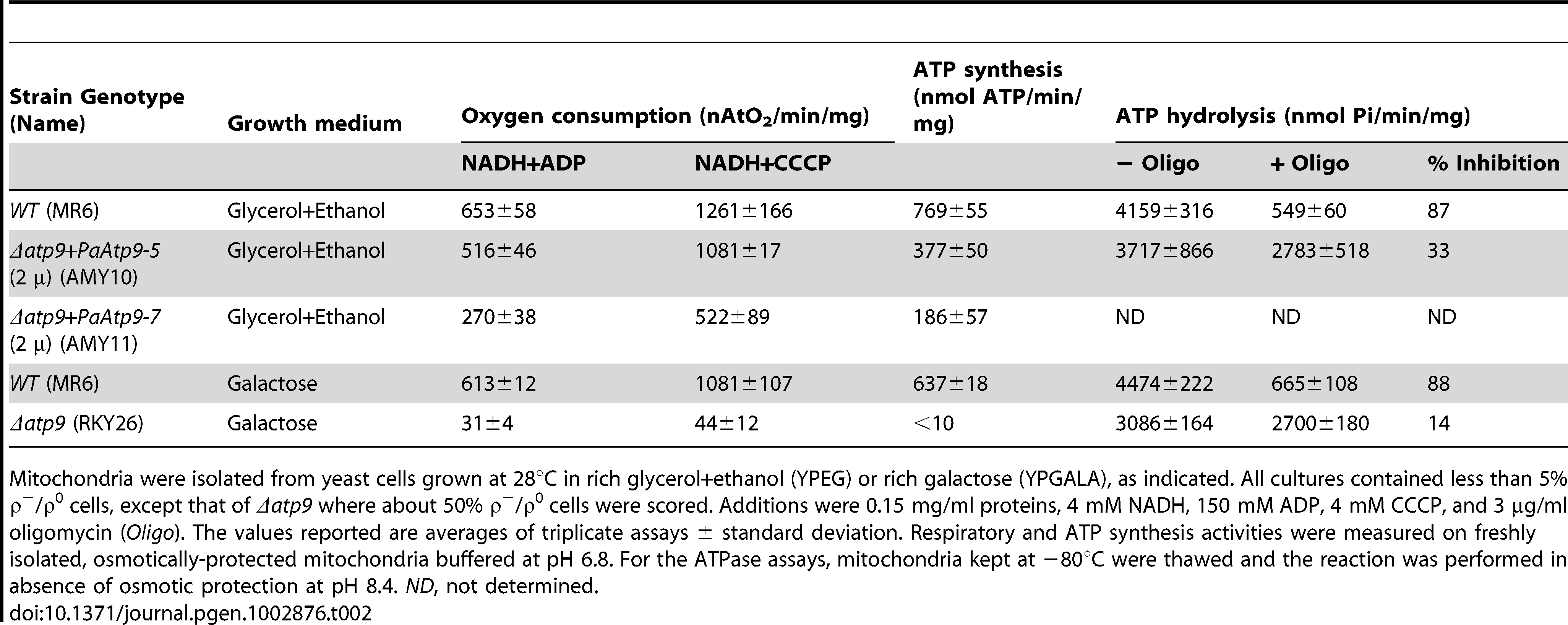 Respiratory and ATP hydrolysis/synthesis activities of mitochondria.
