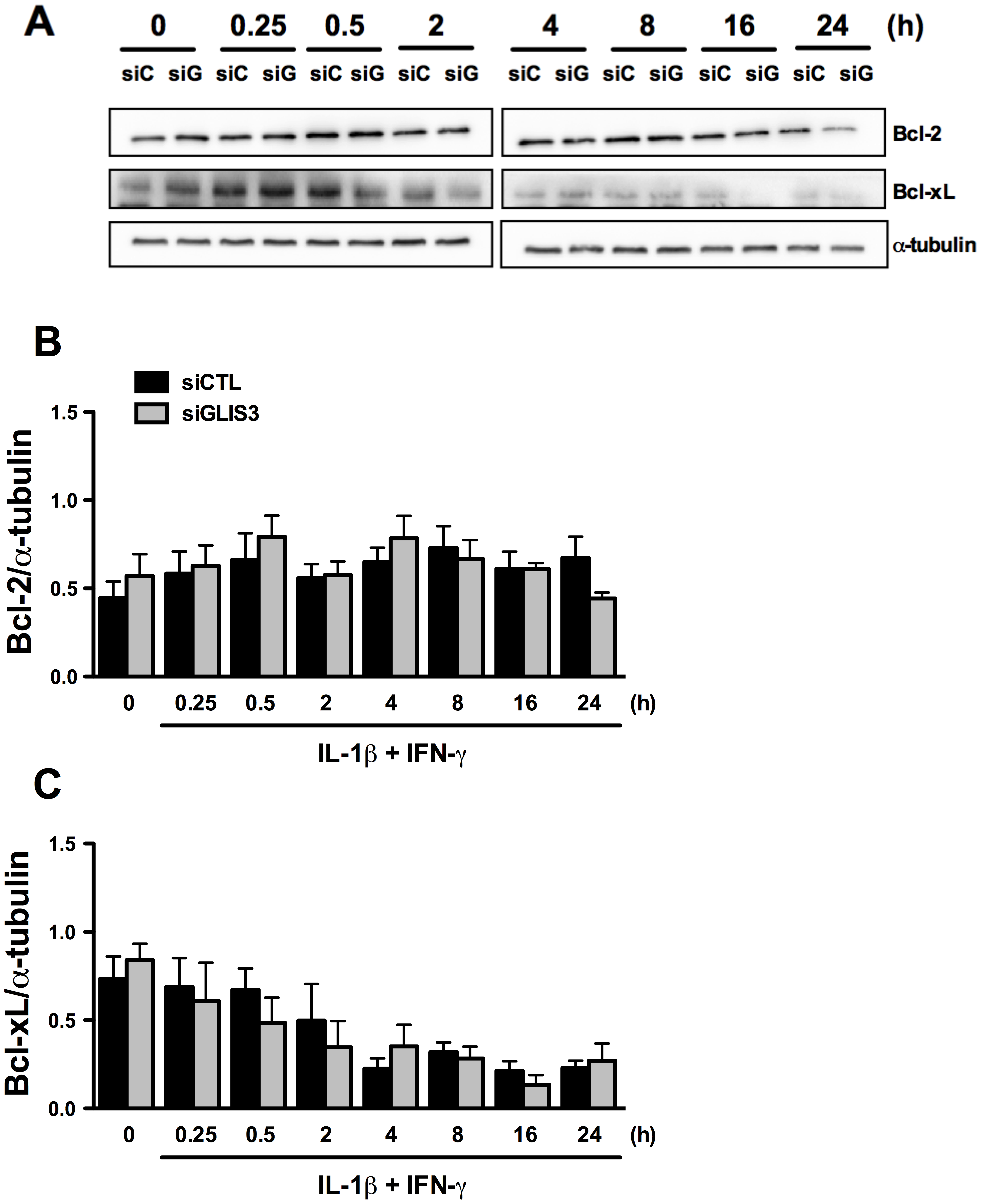 <i>GLIS3</i> KD does not change expression of the anti-apoptotic proteins Bcl-2 and Bcl-xL.